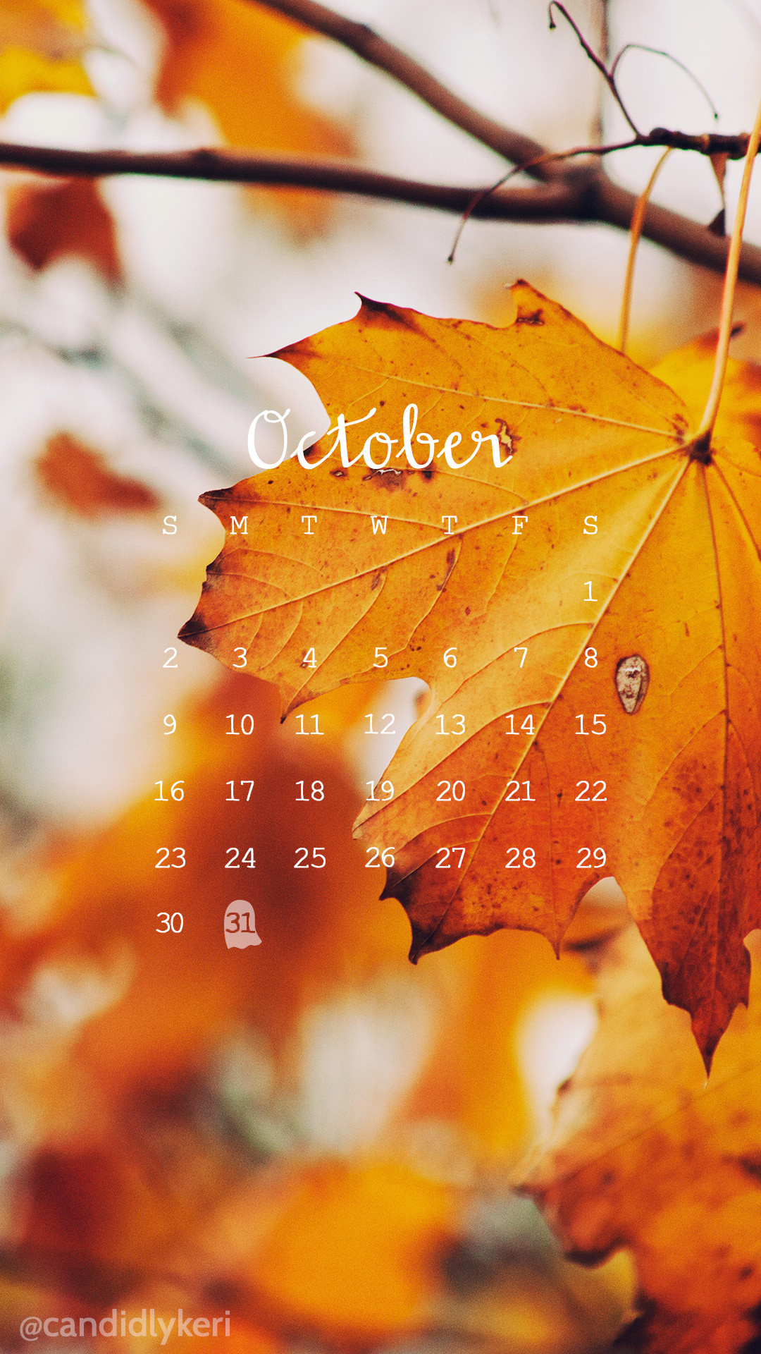 Quotes About Fall Season: Fall Pumpkin Wallpaper And Screensavers (63+ Images