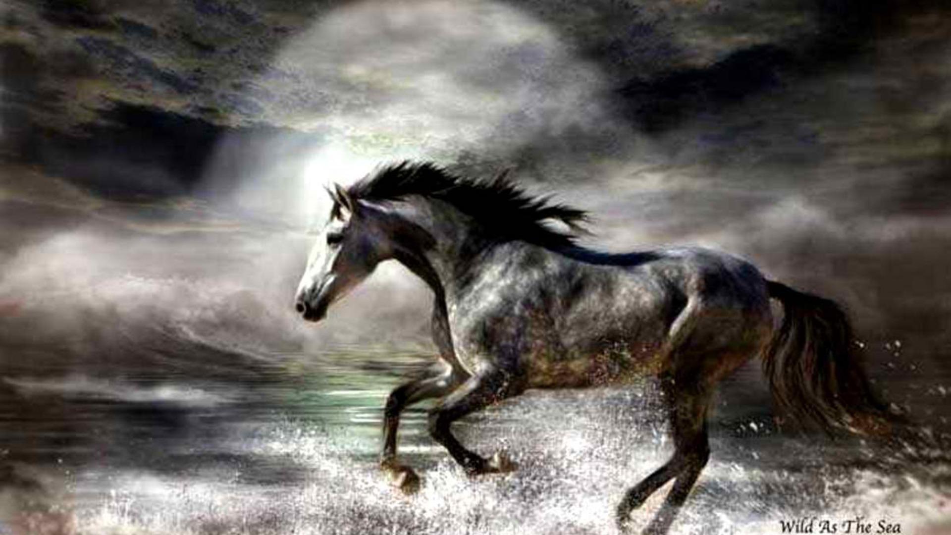 1920x1080 Paint Horse Black And White I