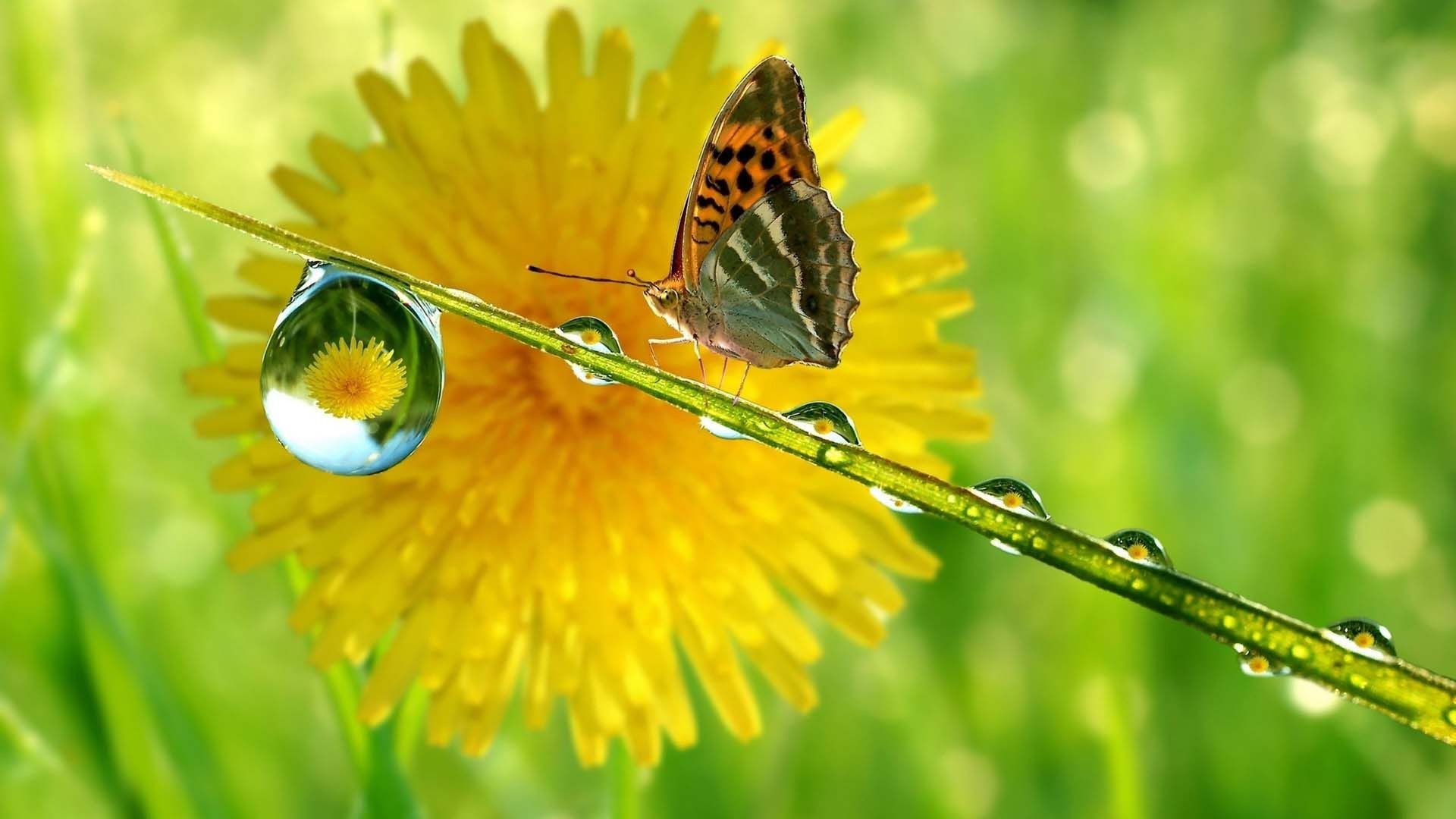 Pretty butterfly wallpaper 59 images - Hd pics of nature with birds ...