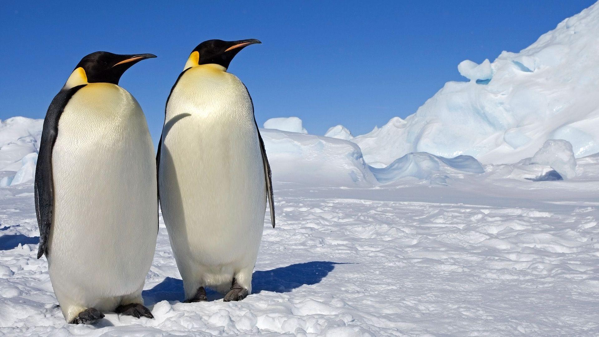 2048x1366 Penguin Wallpaper HD Pictures