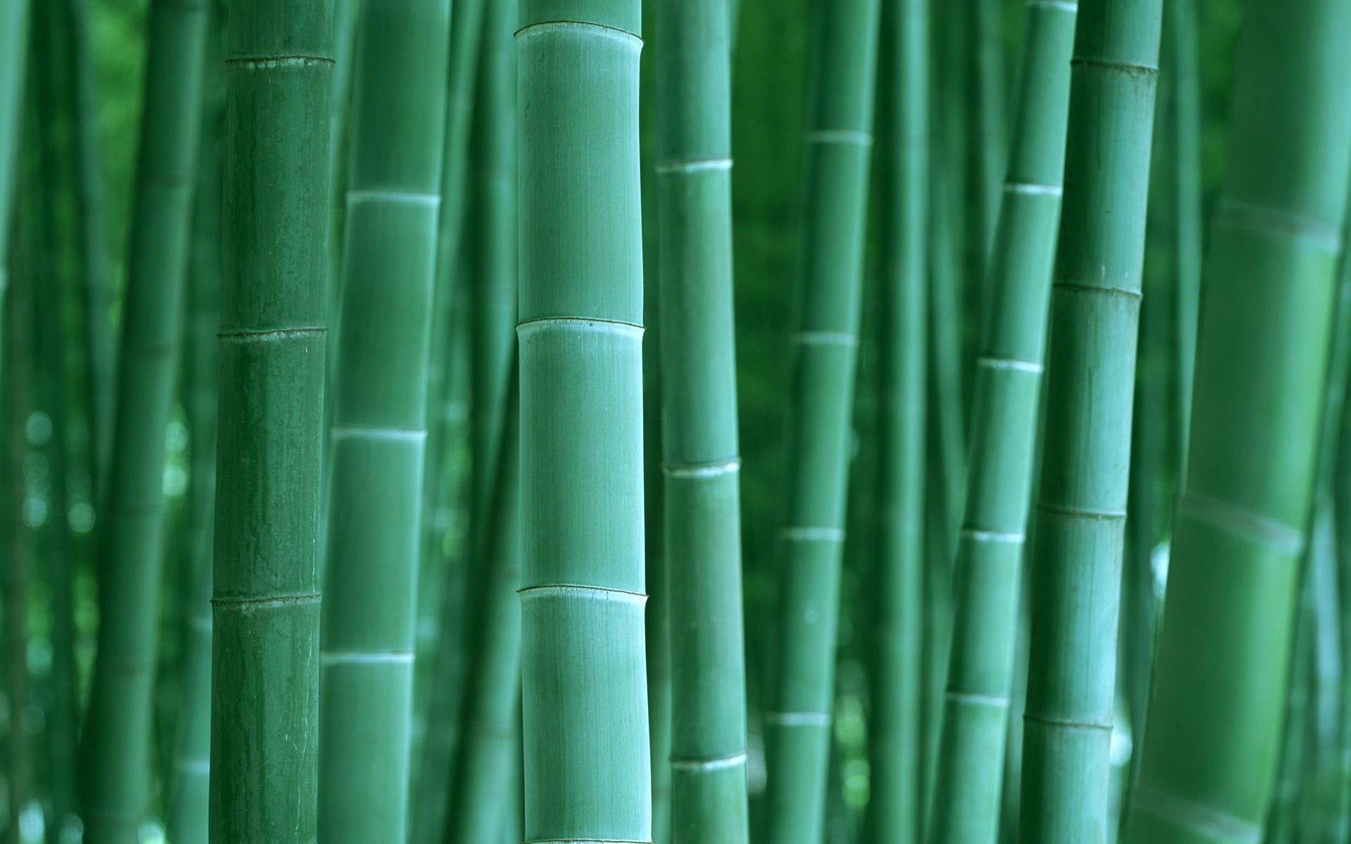 1920x1200 Bamboo Desktop Wallpaper 1947