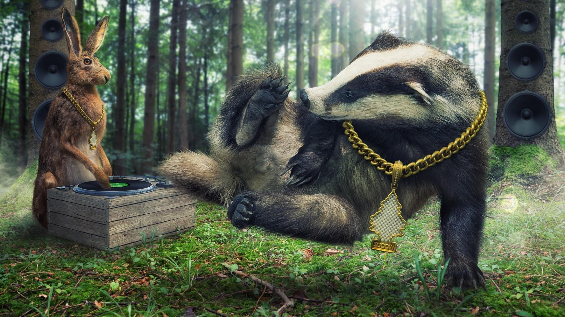 Honey Badger Wallpaper 61 Images