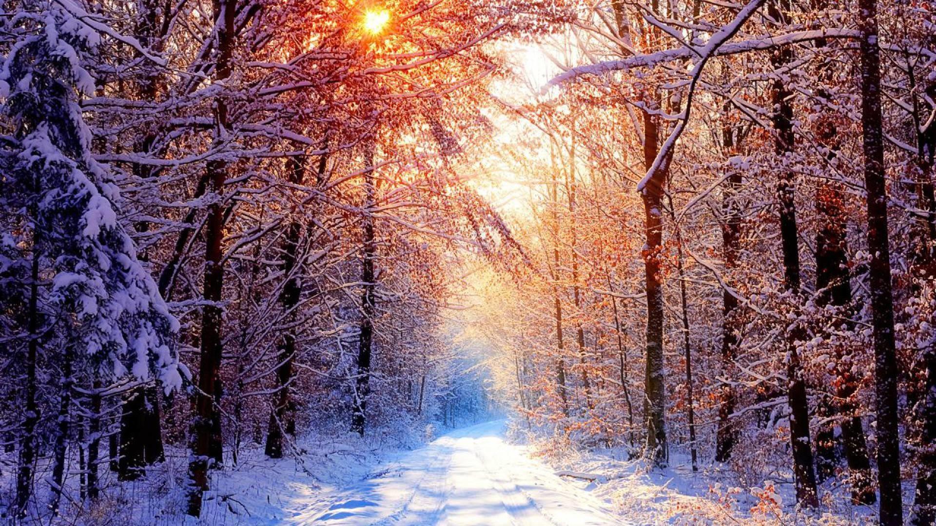 winter forest desktop wallpaper 26 images