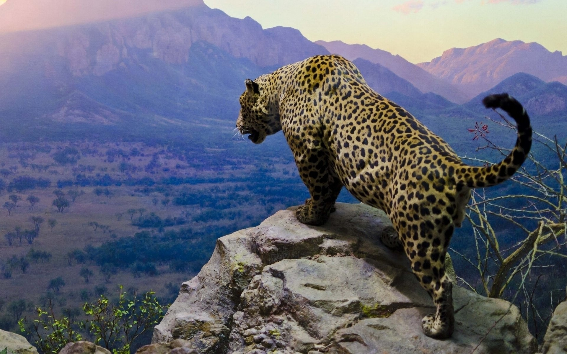 1920x1200 Tiere - Jaguar Wallpaper