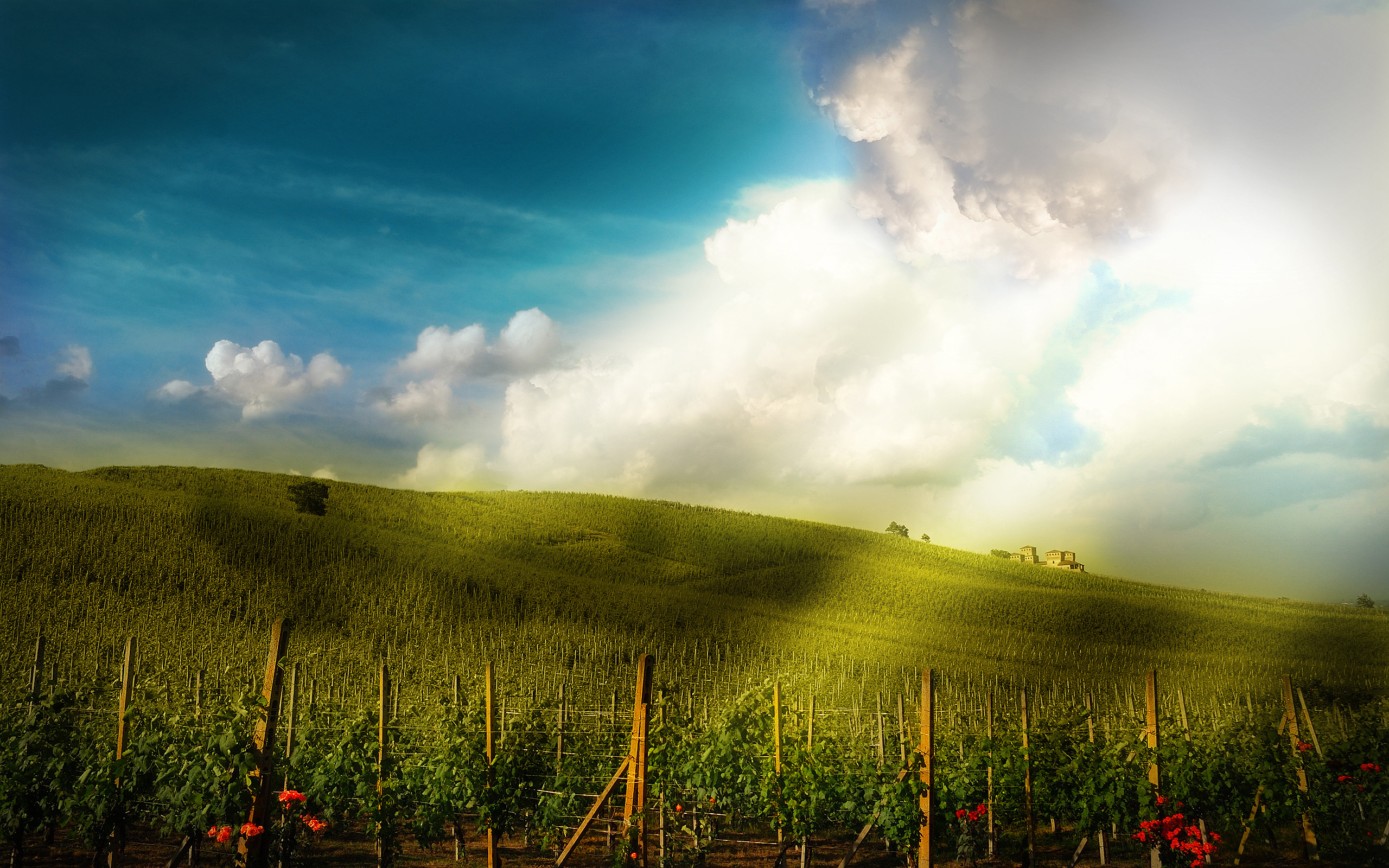 2560x1600 ... Fantastic Vineyard HD Widescreen Background Images - VH2233272 ...