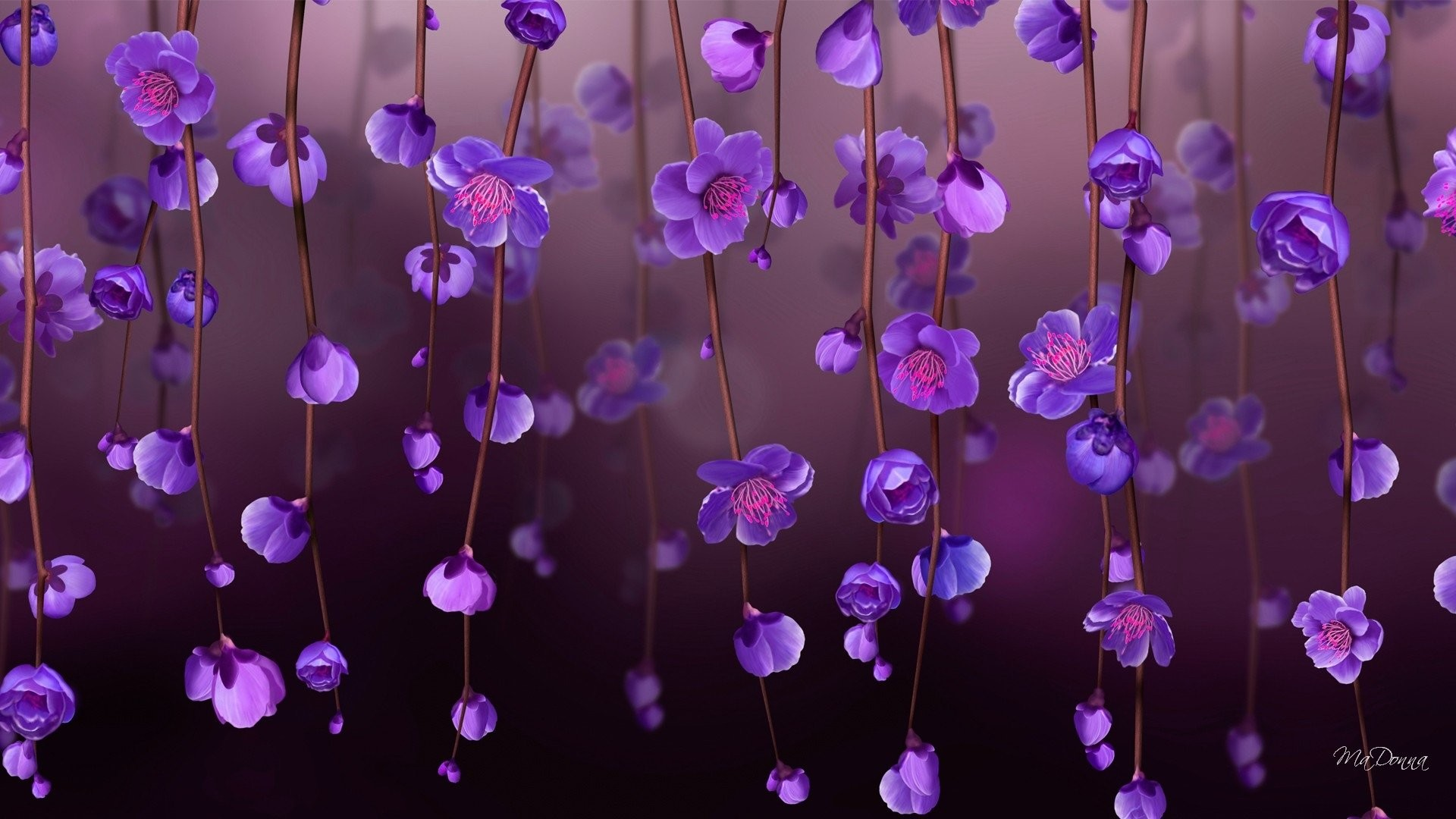 purple flowers wallpapers (76+ images)