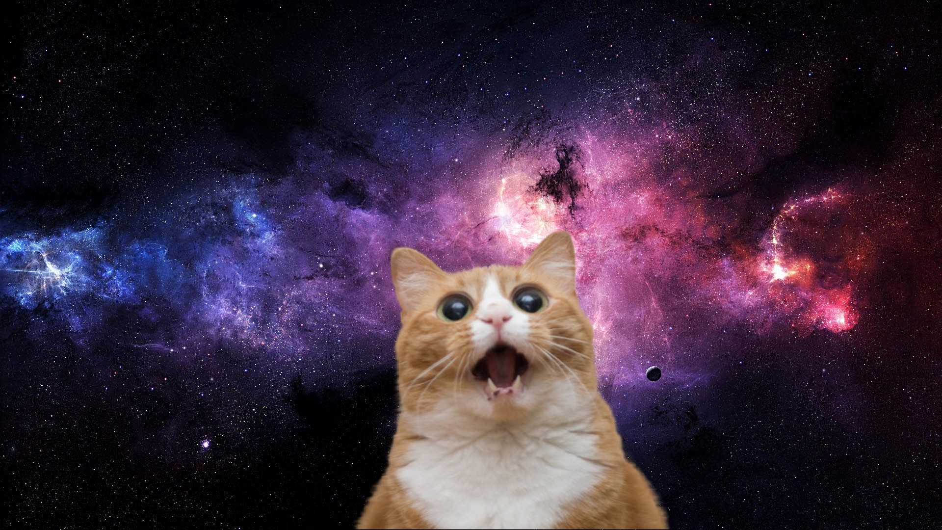 Wallpaper crazy cats and dogs 57 images - Space kitty wallpaper ...