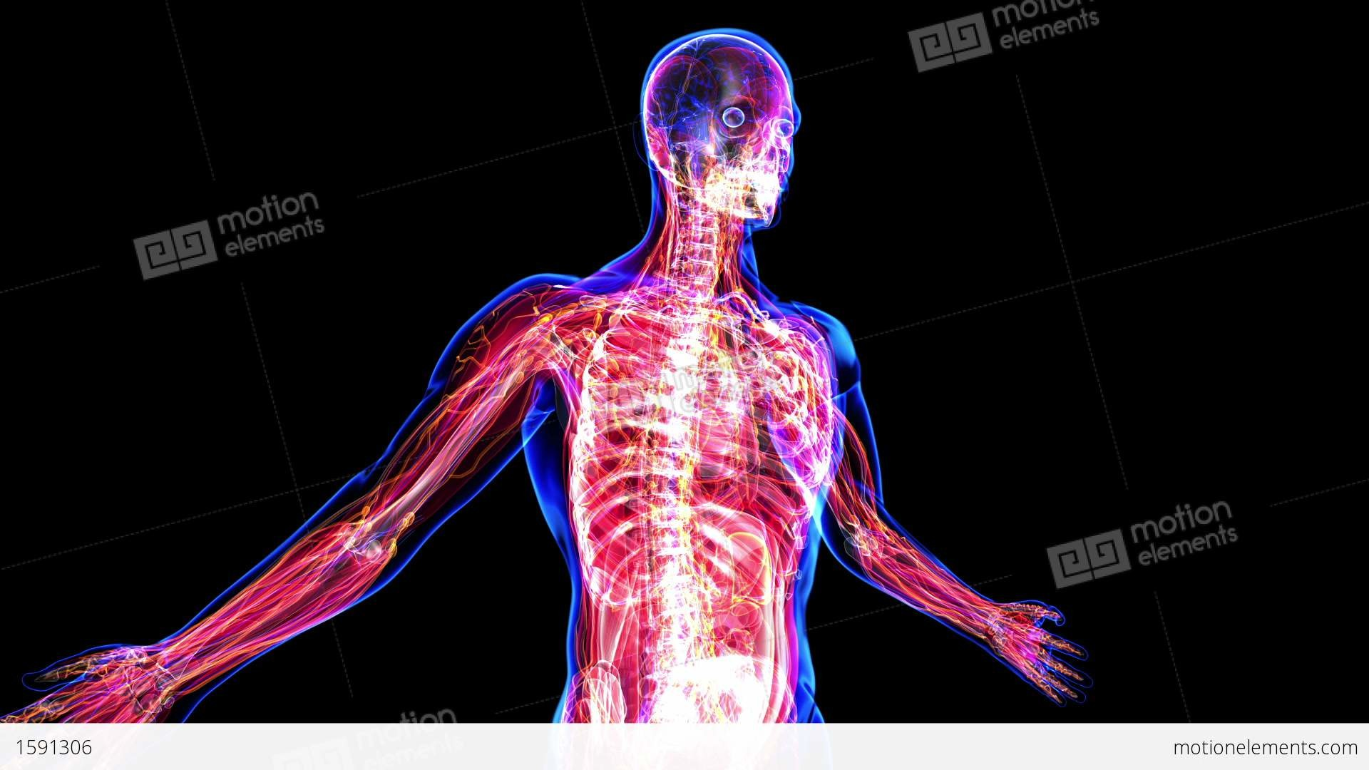 1920x1080 ... Wallpapers Inner Human Body Image Hd Anatomy Of The Human Body Stock  Animation Royalty Free Stock ...