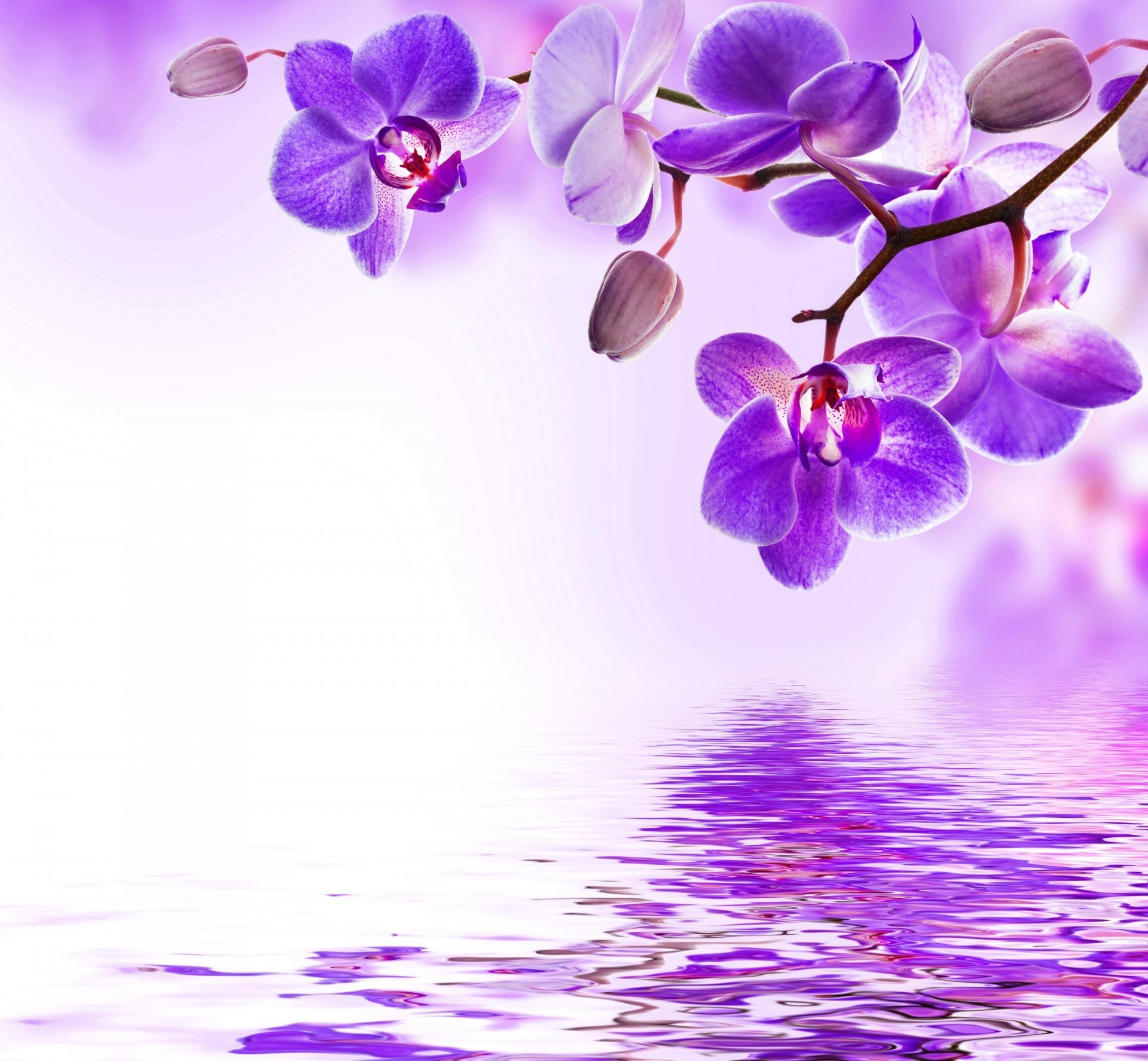 1920x1774 Orchid Purple Water Reflection Flowers Beautiful Flower Bloom