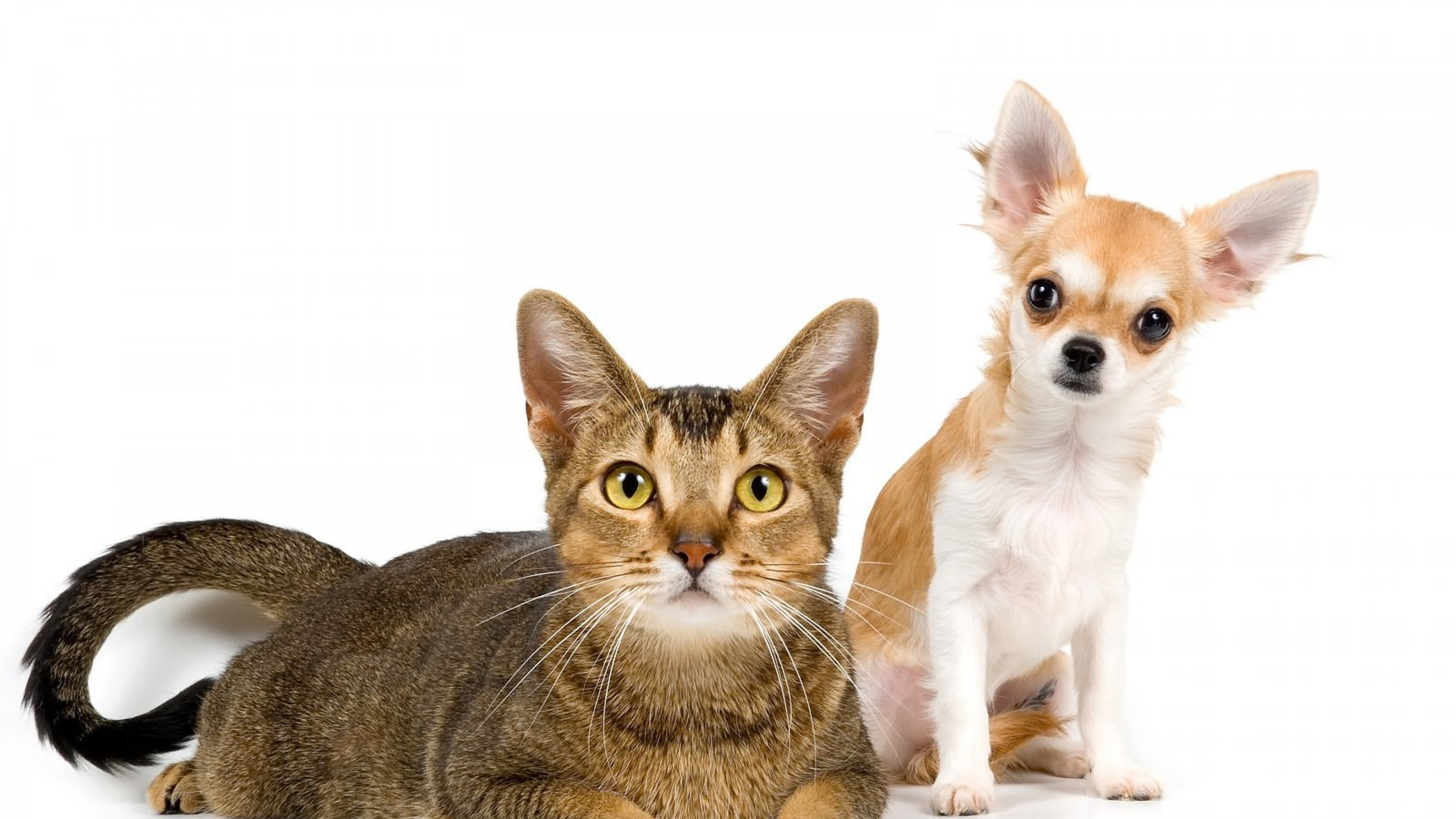 3840x2160  Wallpaper cat, dog, friends, couple, photo shoot