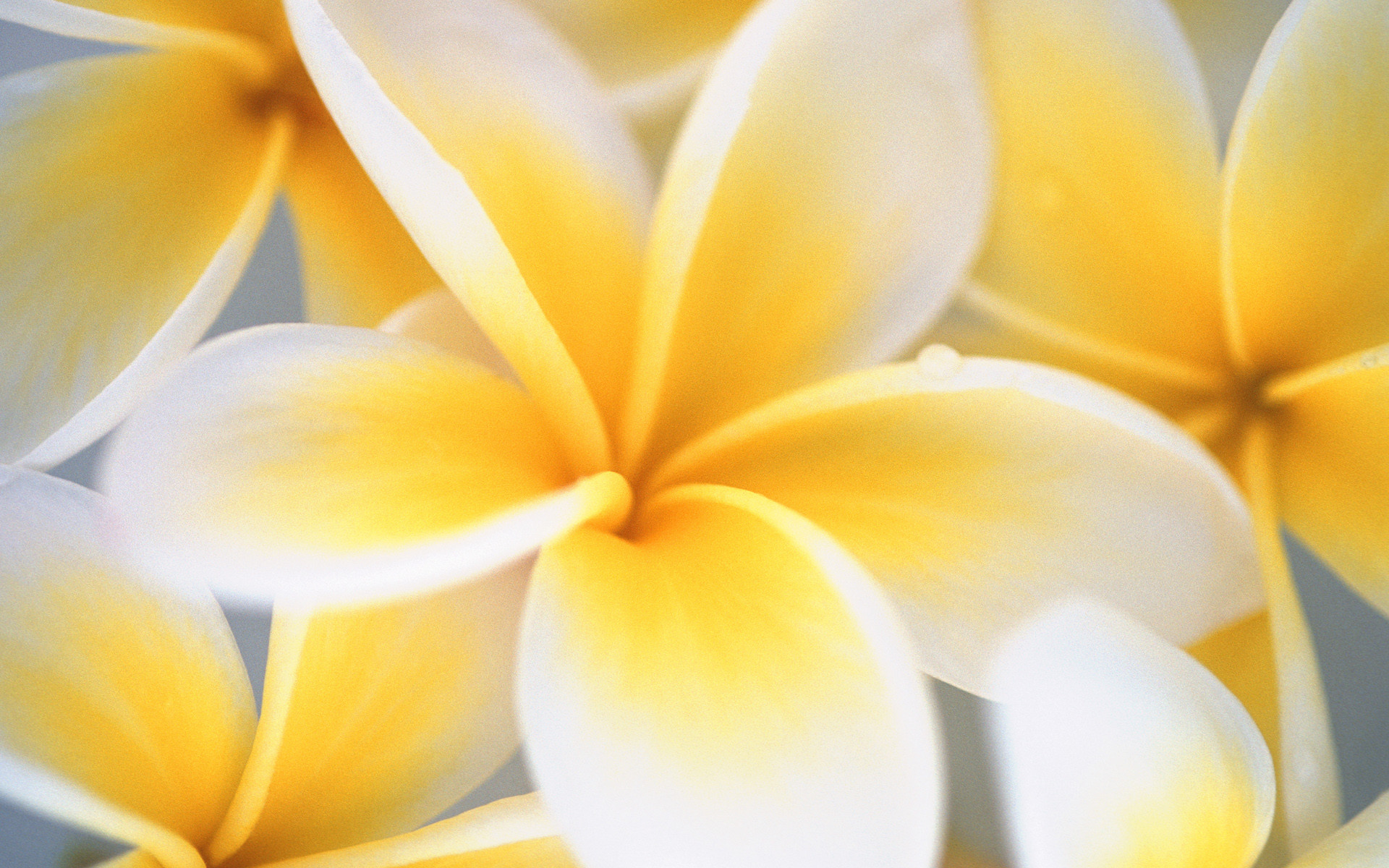 Yellow And White Wallpaper 60 Images