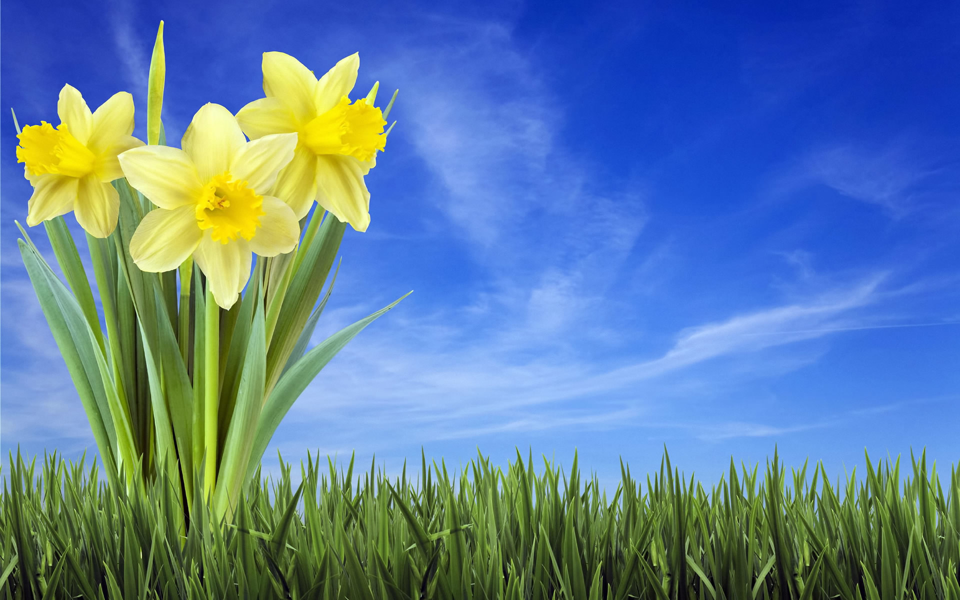 1920x1200 Background Spring Wallpapers Hd Widescreen Wallumi px