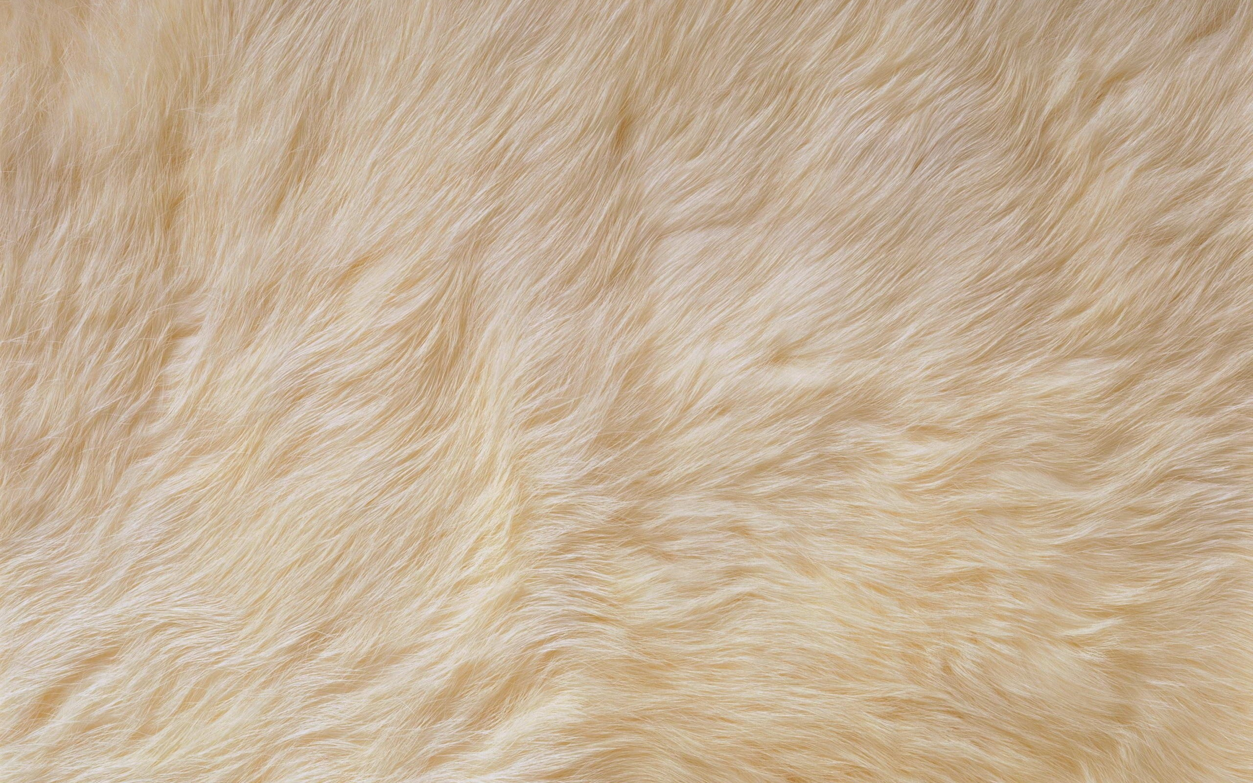 Pink Fur Wallpaper 53 Images