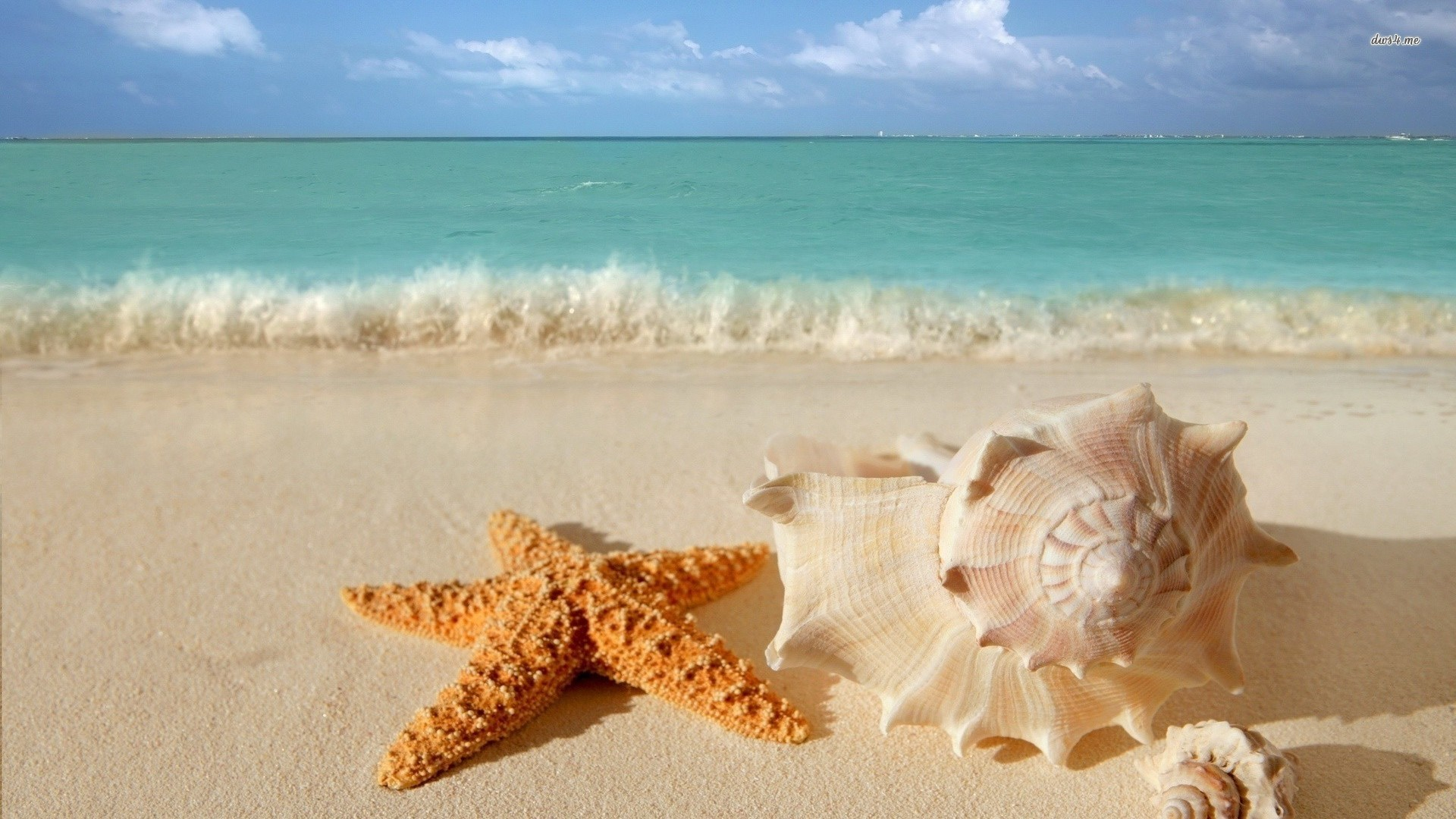 1920x1080 Waves starfish seashells depth of field sea wallpaper. Fresh HD wallpapers  for your desktop.