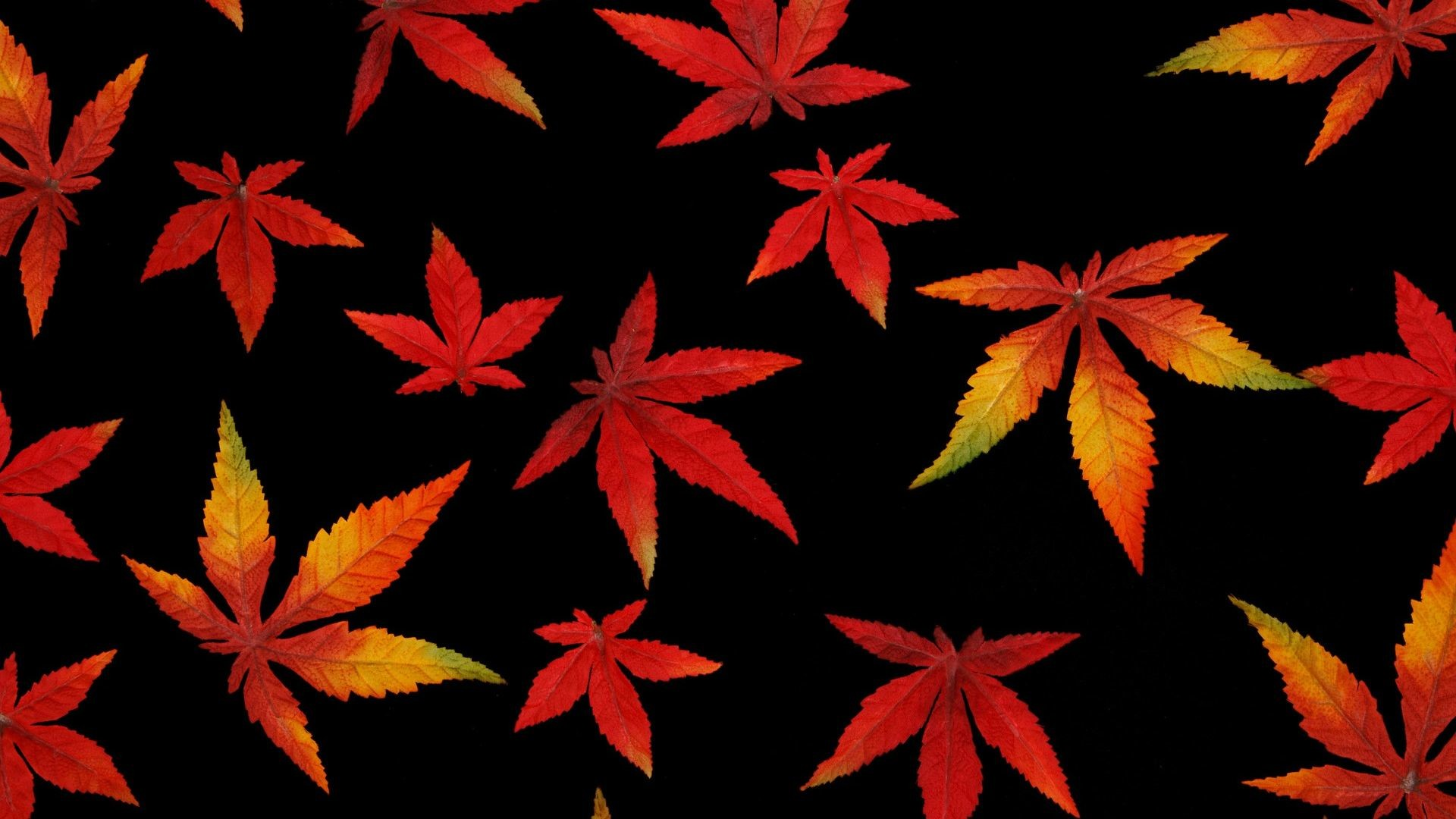 1920x1080 Abstract Autumn Leaf with Black Background Wallpaper