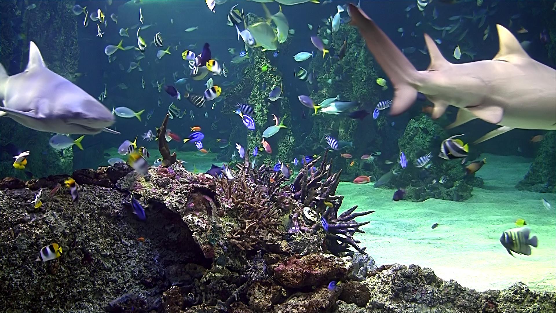 Aquarium Live Wallpaper for PC (55+ images)