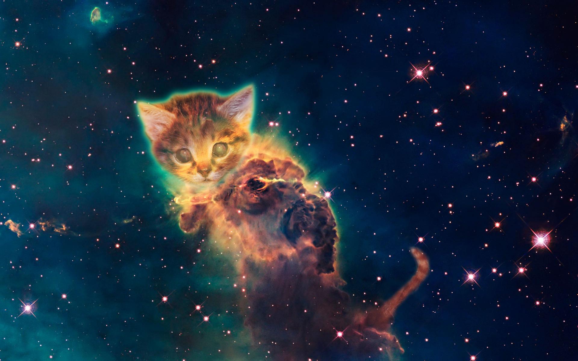 1920x1200 Galaxy Cat Wallpaper