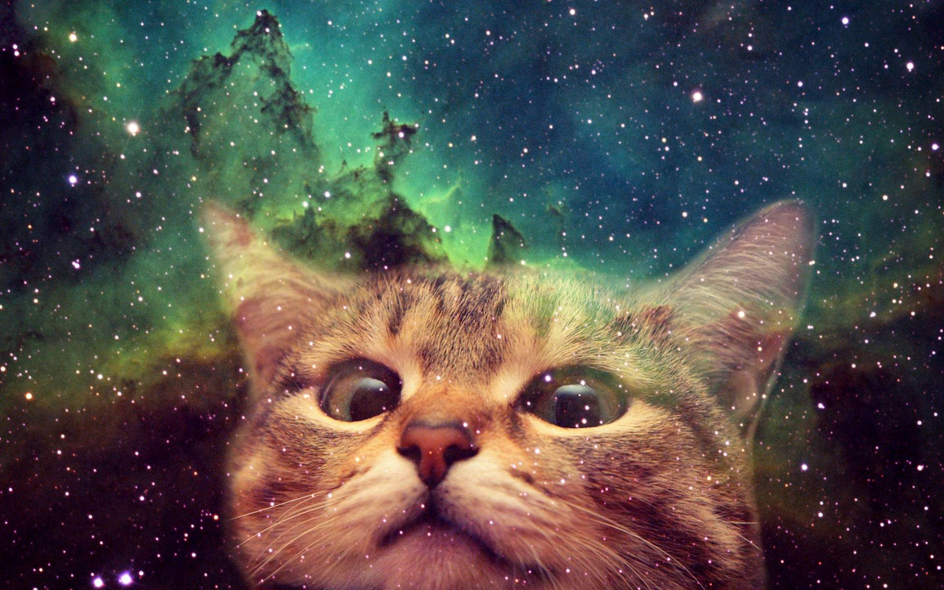 cat astronaut wallpaper (69+ images)