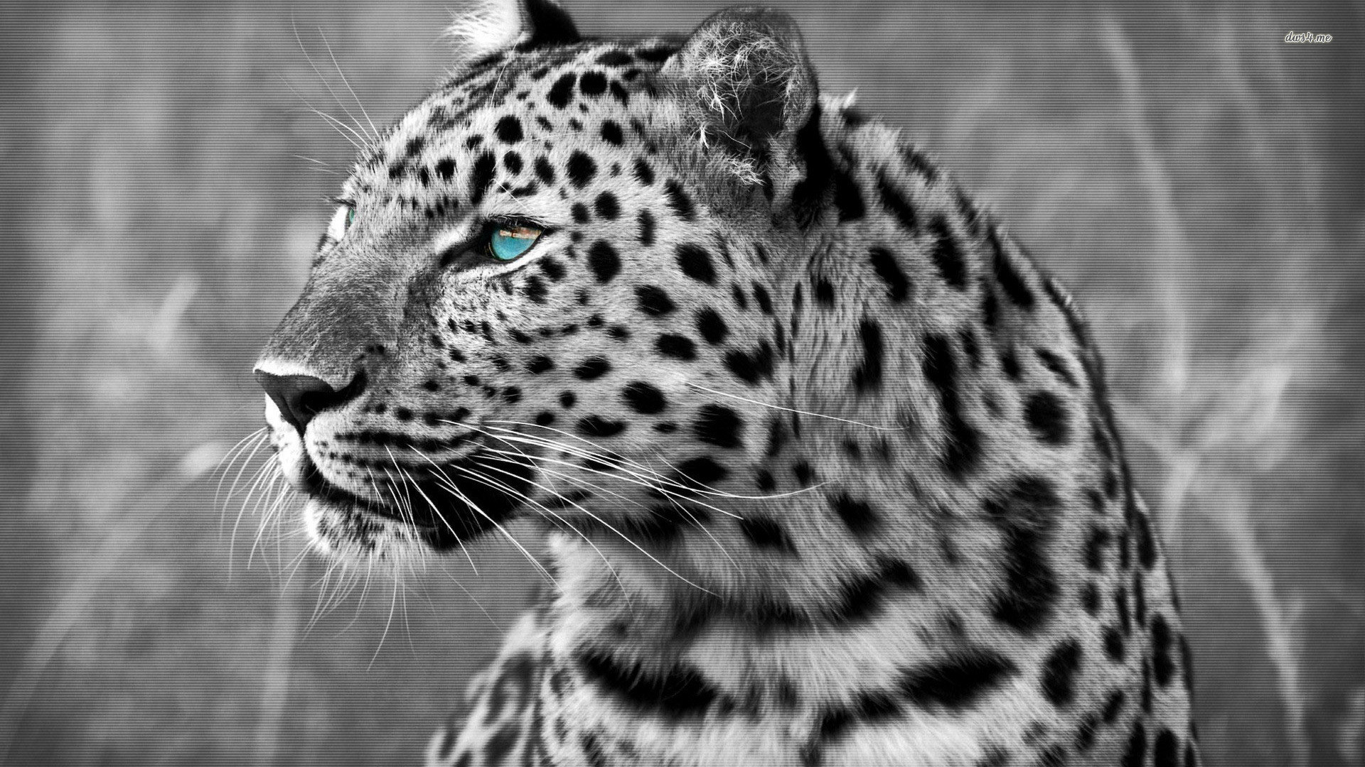 Digital Leopard Art Wallpapers: Snow Leopard Wallpaper (72+ Images