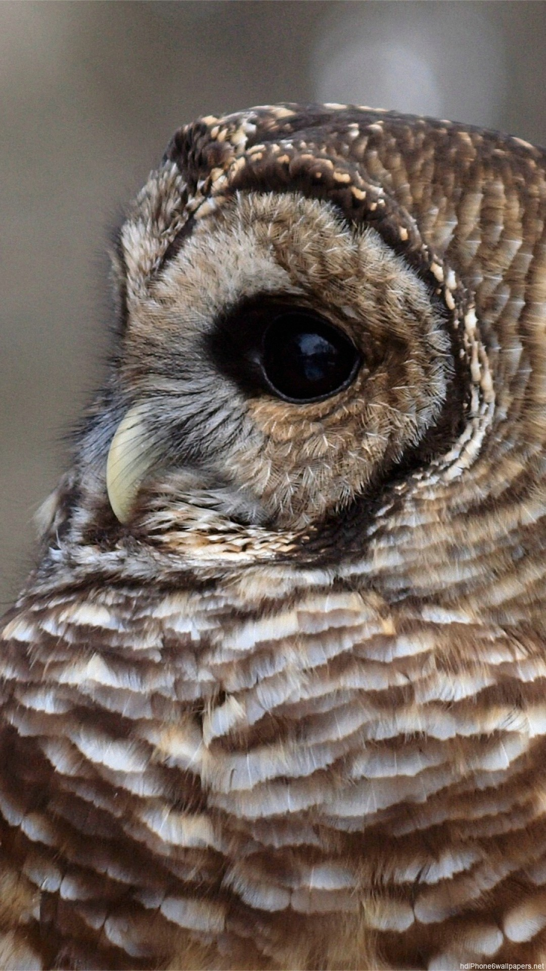 Owl IPhone Wallpaper (80+ Images