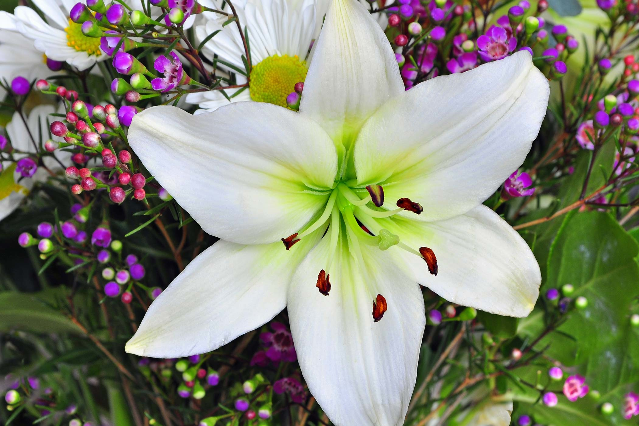 2100x1400 Lily Poisoning in Dogs Symptoms Causes Diagnosis Treatment