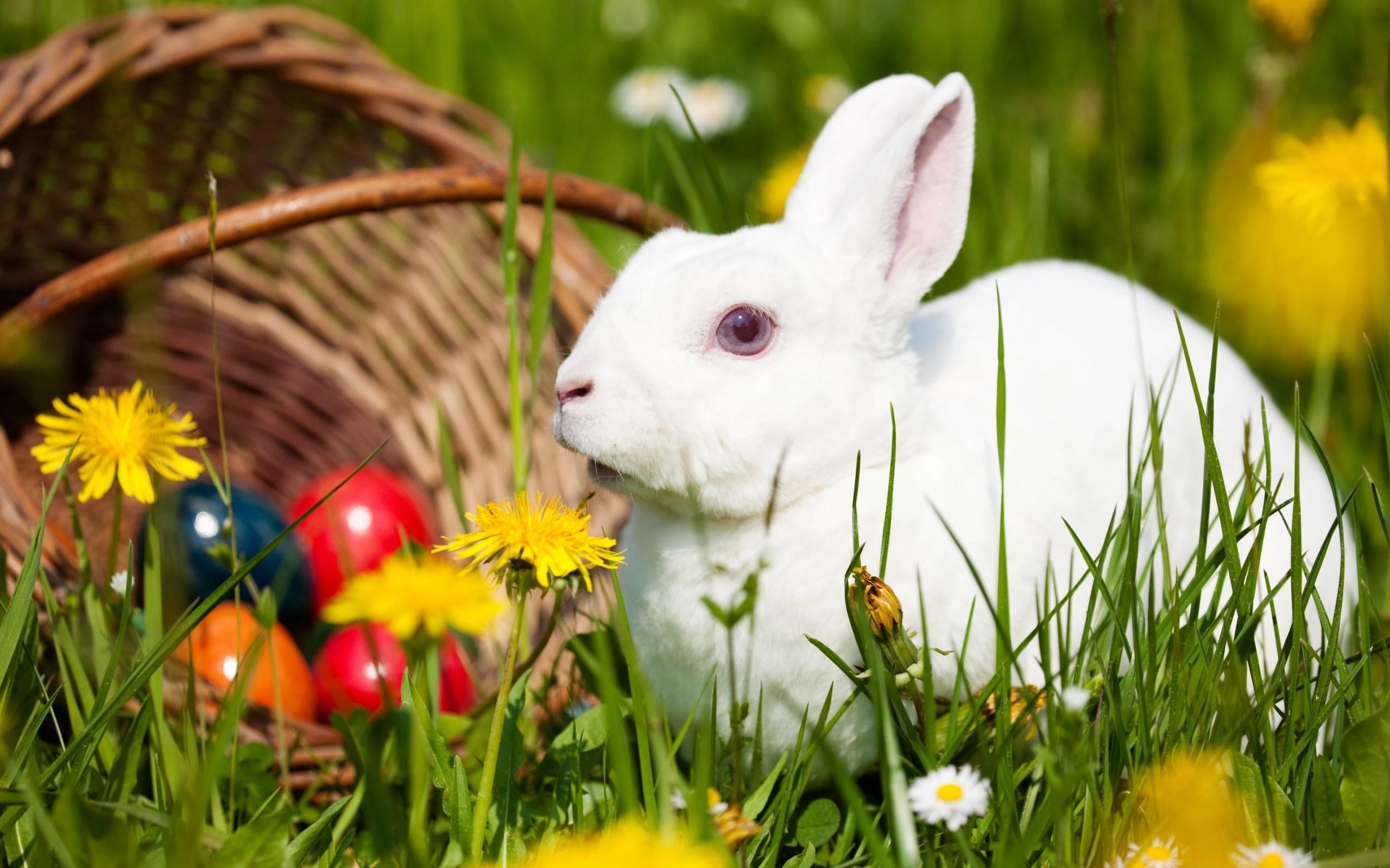 Rabbit Wallpapers For Desktop 65 Images