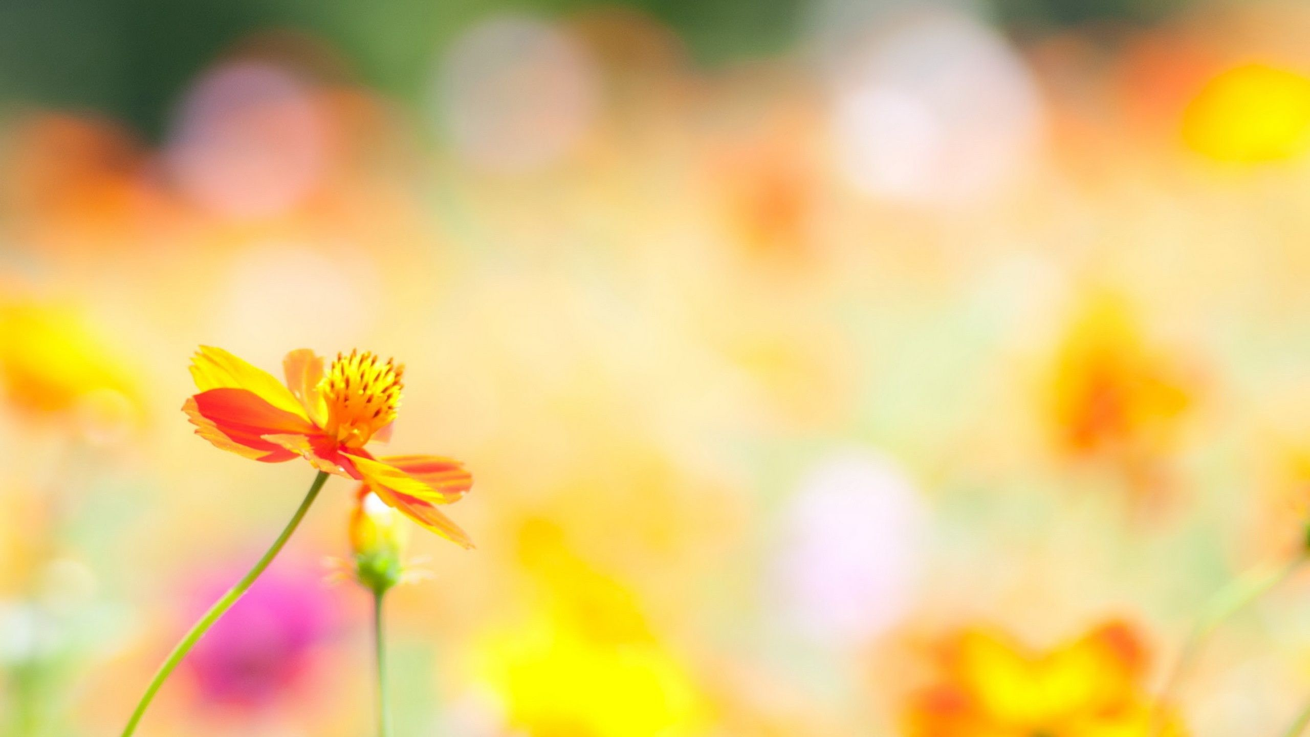 flower background wallpaper (66+ images)