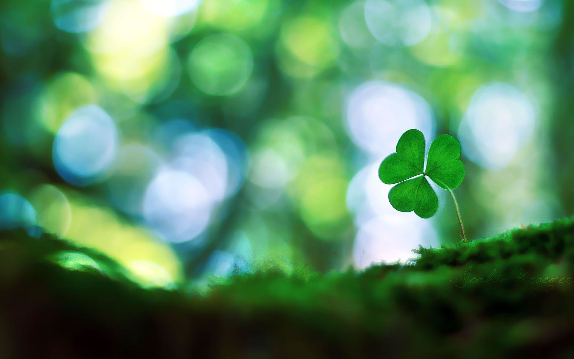 Four Leaf Clover Wallpaper 44 Images
