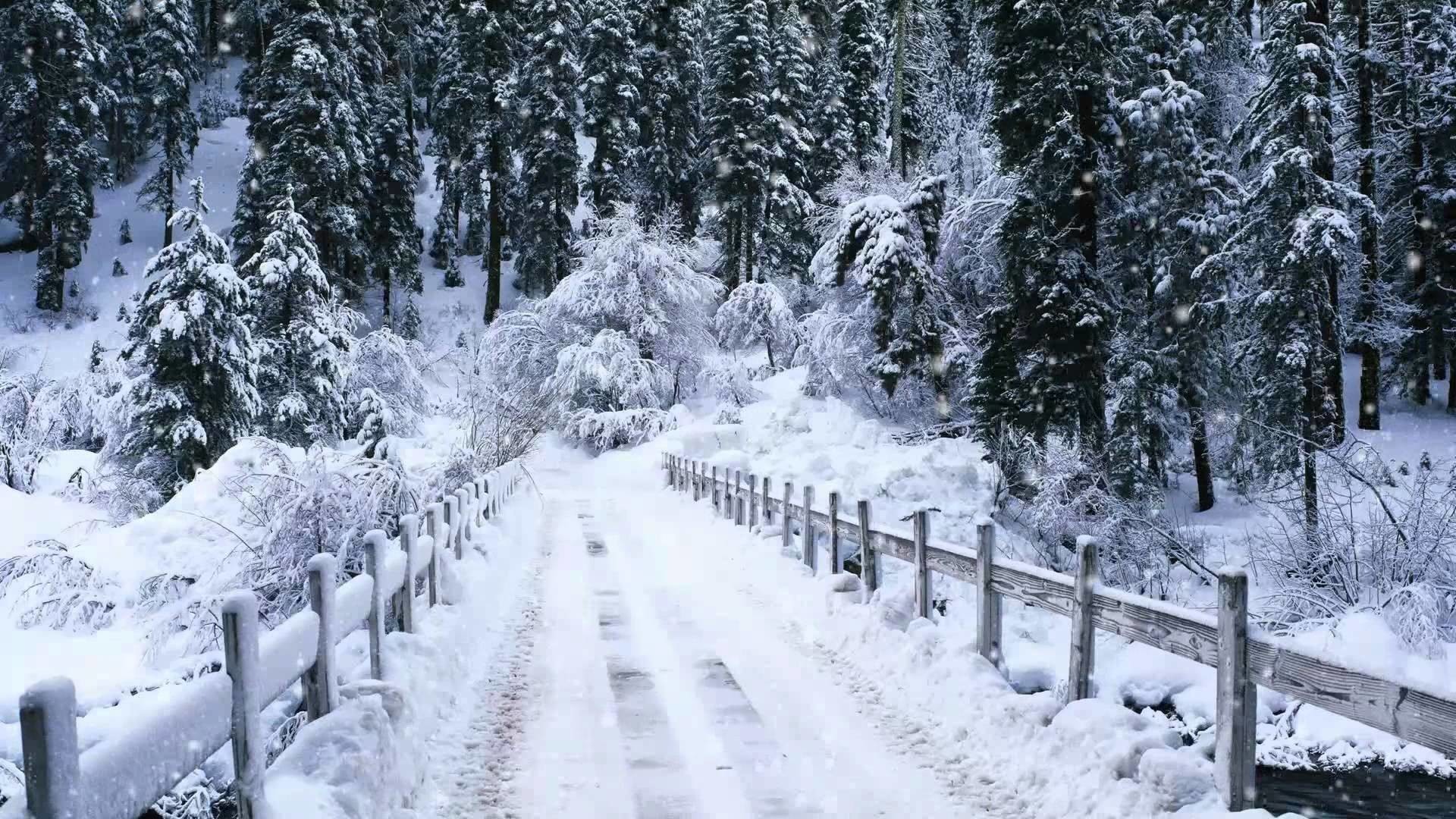Live Snow Falling Wallpaper 54 Images