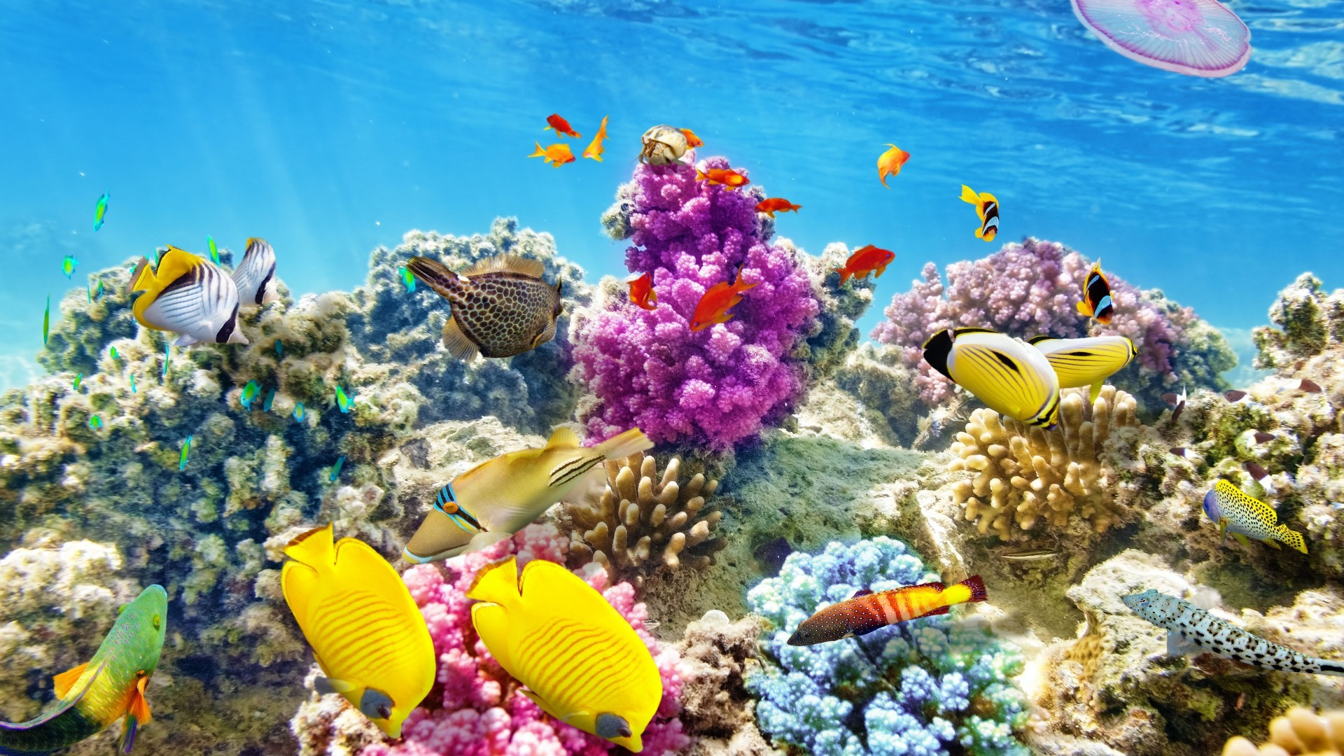 Coral Reef Wallpaper HD (65+ images)