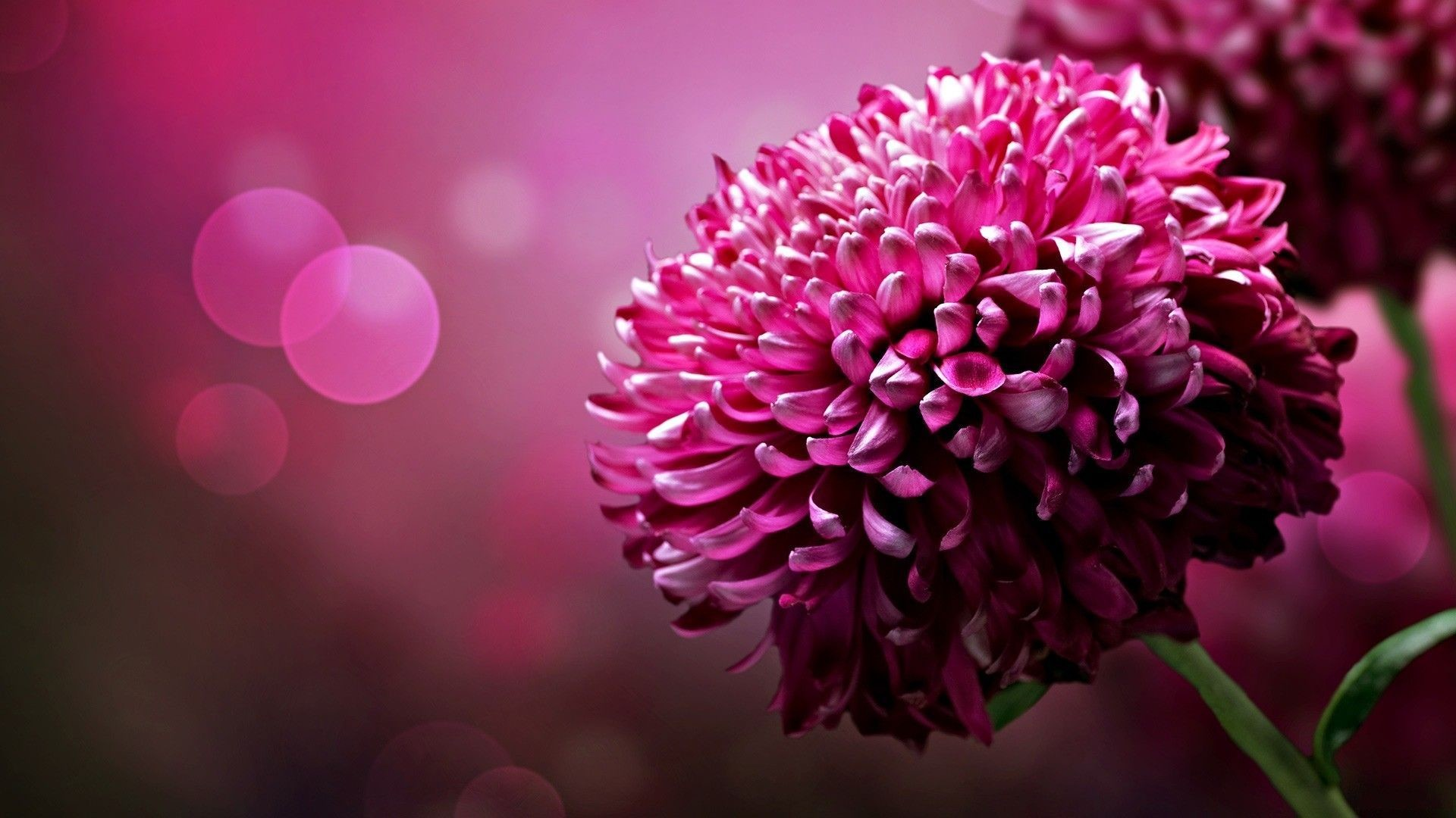 flowers wallpaper 64 images