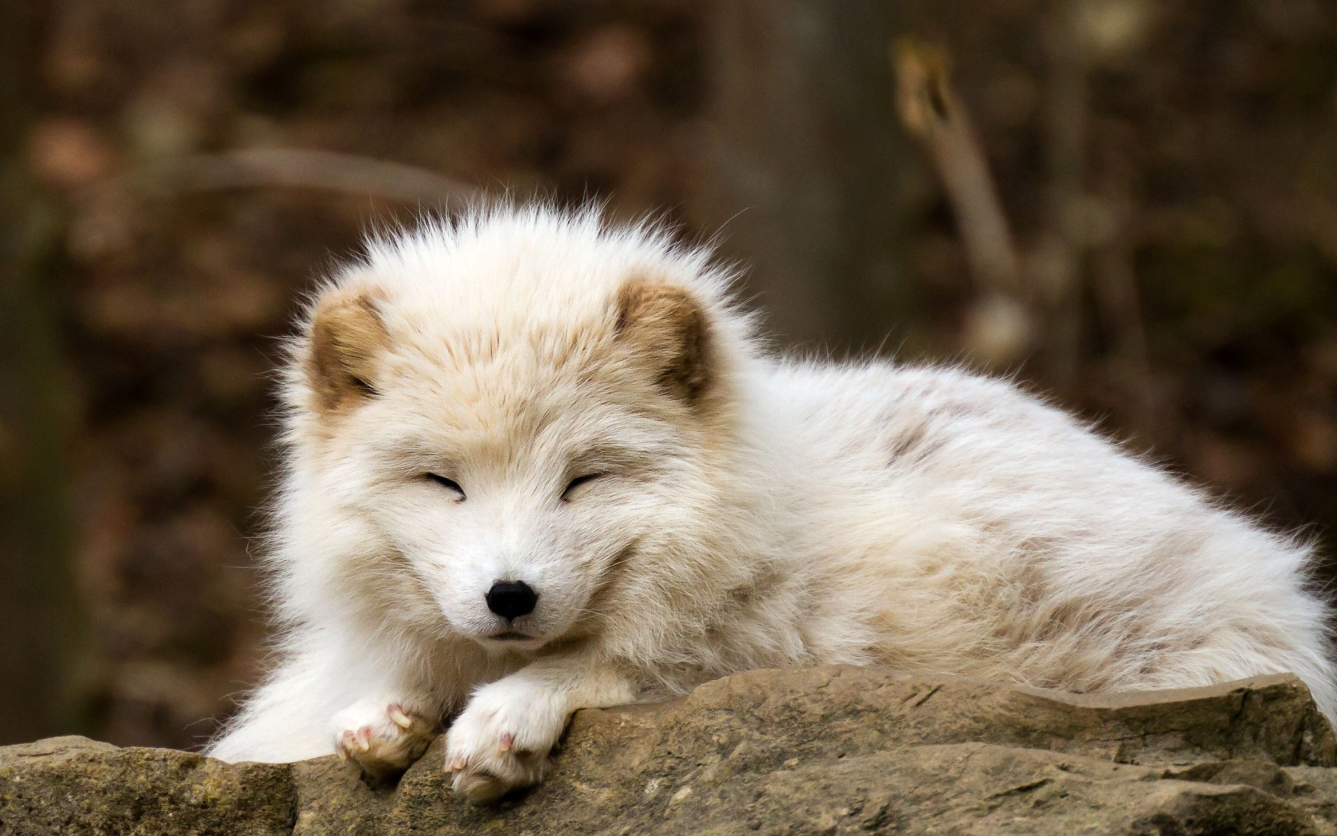 Cute baby fox wallpaper 54 images - Cute baby animal desktop backgrounds ...