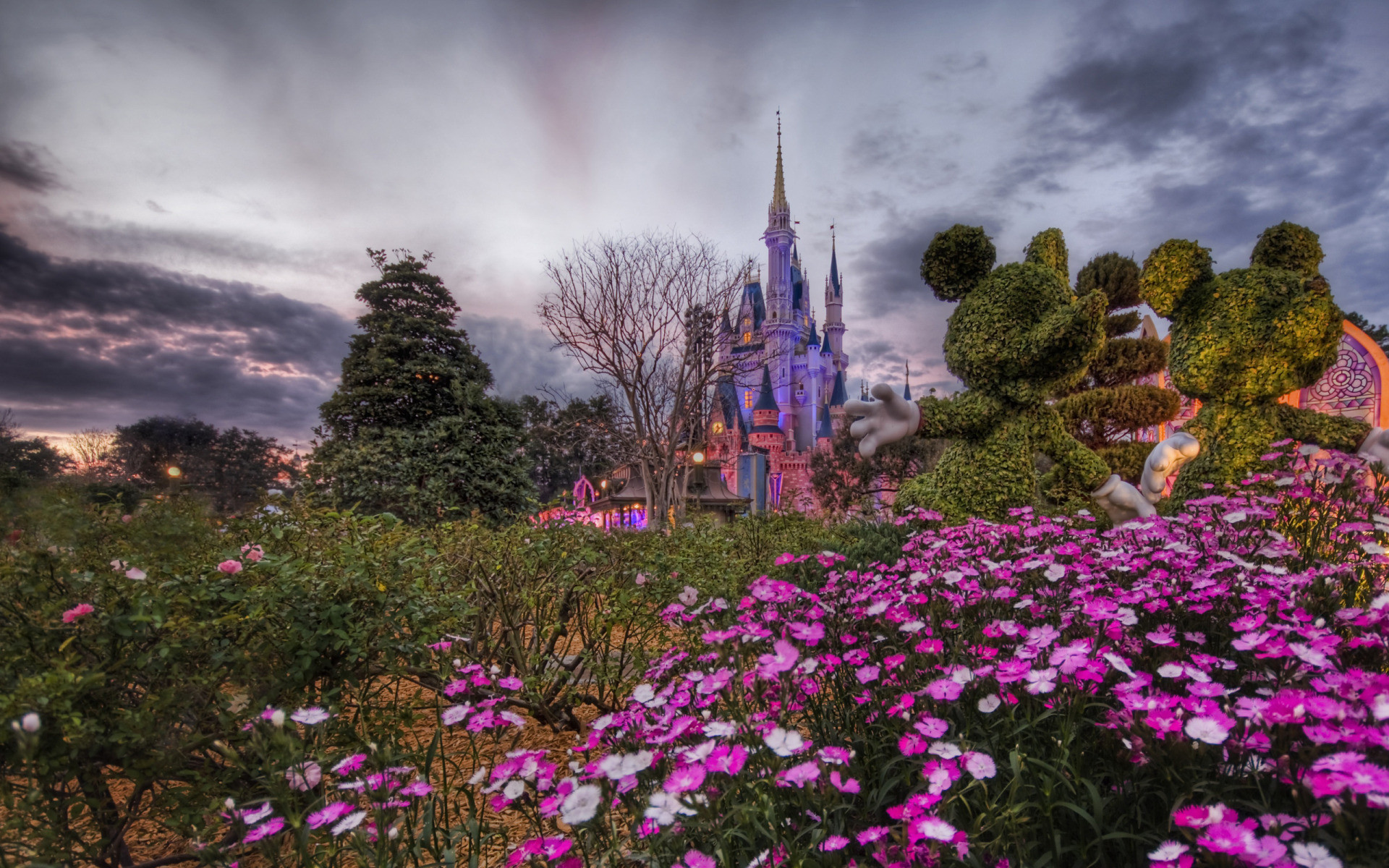 1920x1200 Disney World Flower Desktop Wallpaper