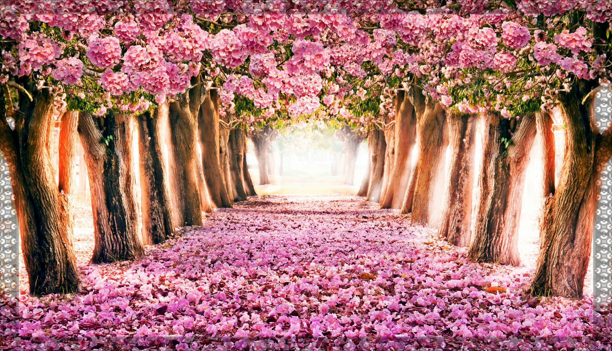 Spring wallpaper computer 64 images - Free computer backgrounds for spring ...