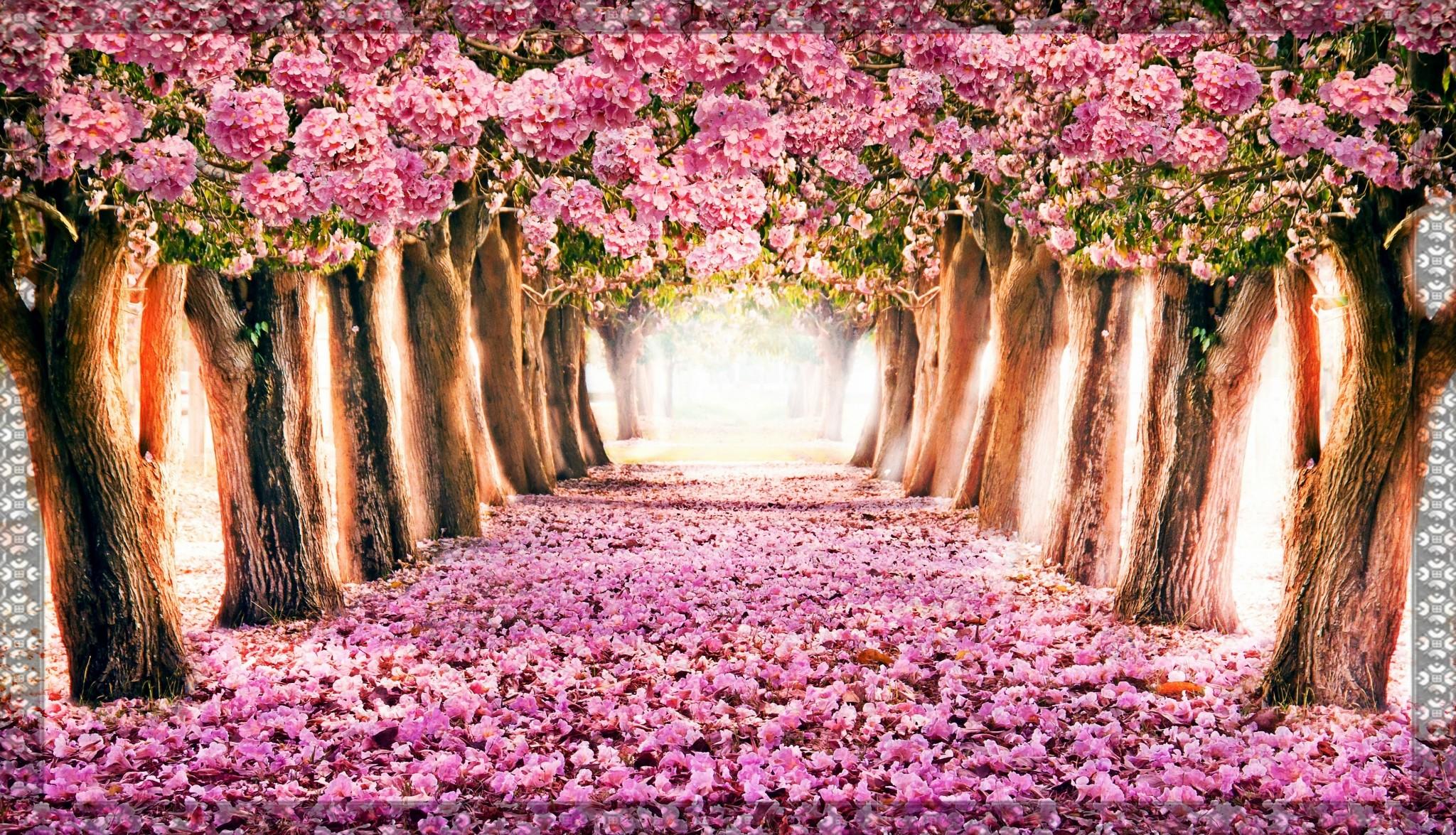 spring wallpaper computer 64 images