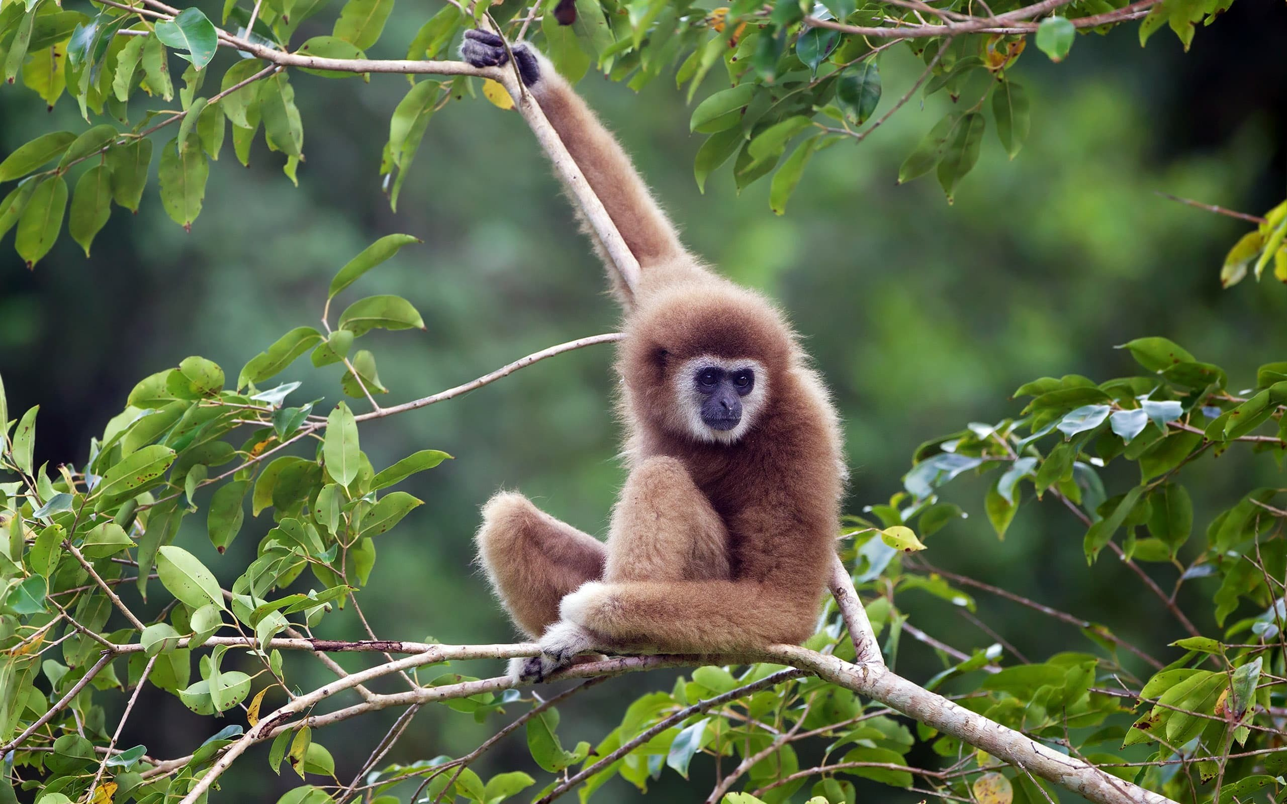 2560x1600 ... Top 25 most beautiful monkey photos HD in the world