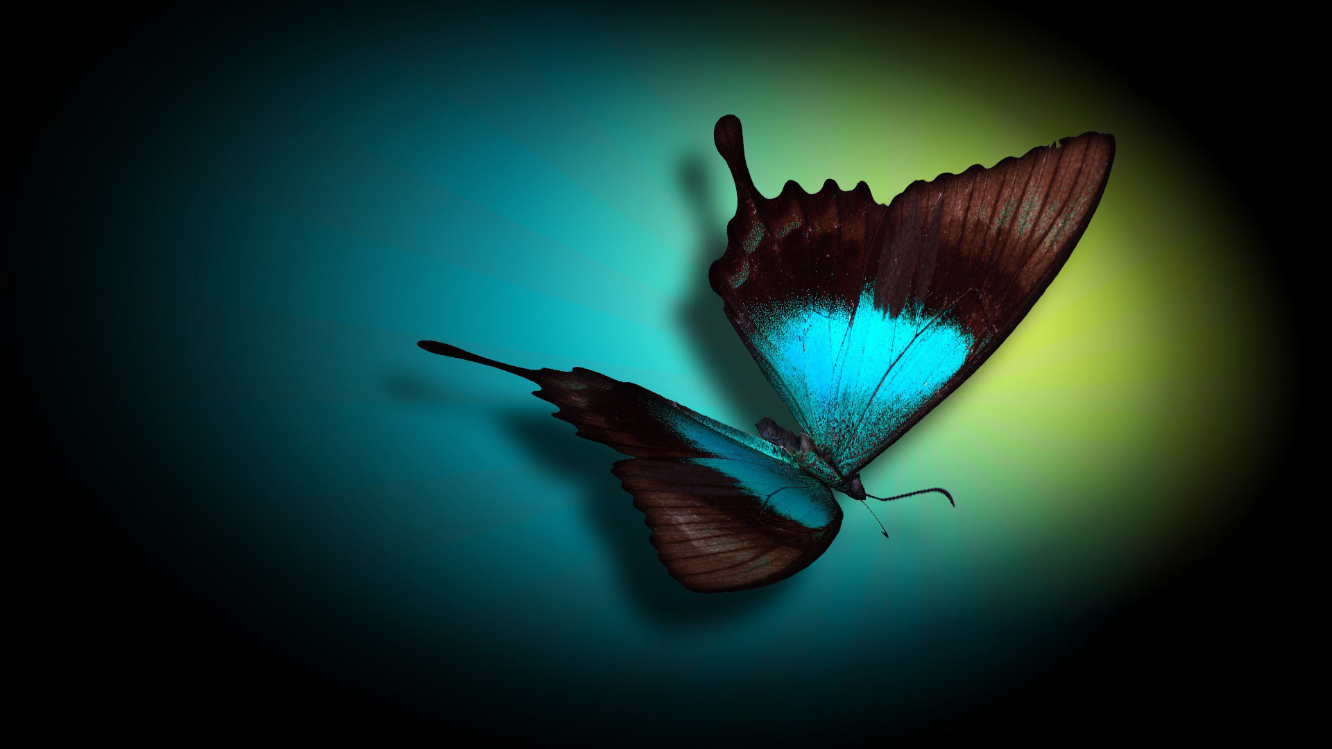 Gothic Butterfly Wallpaper Iphone Other