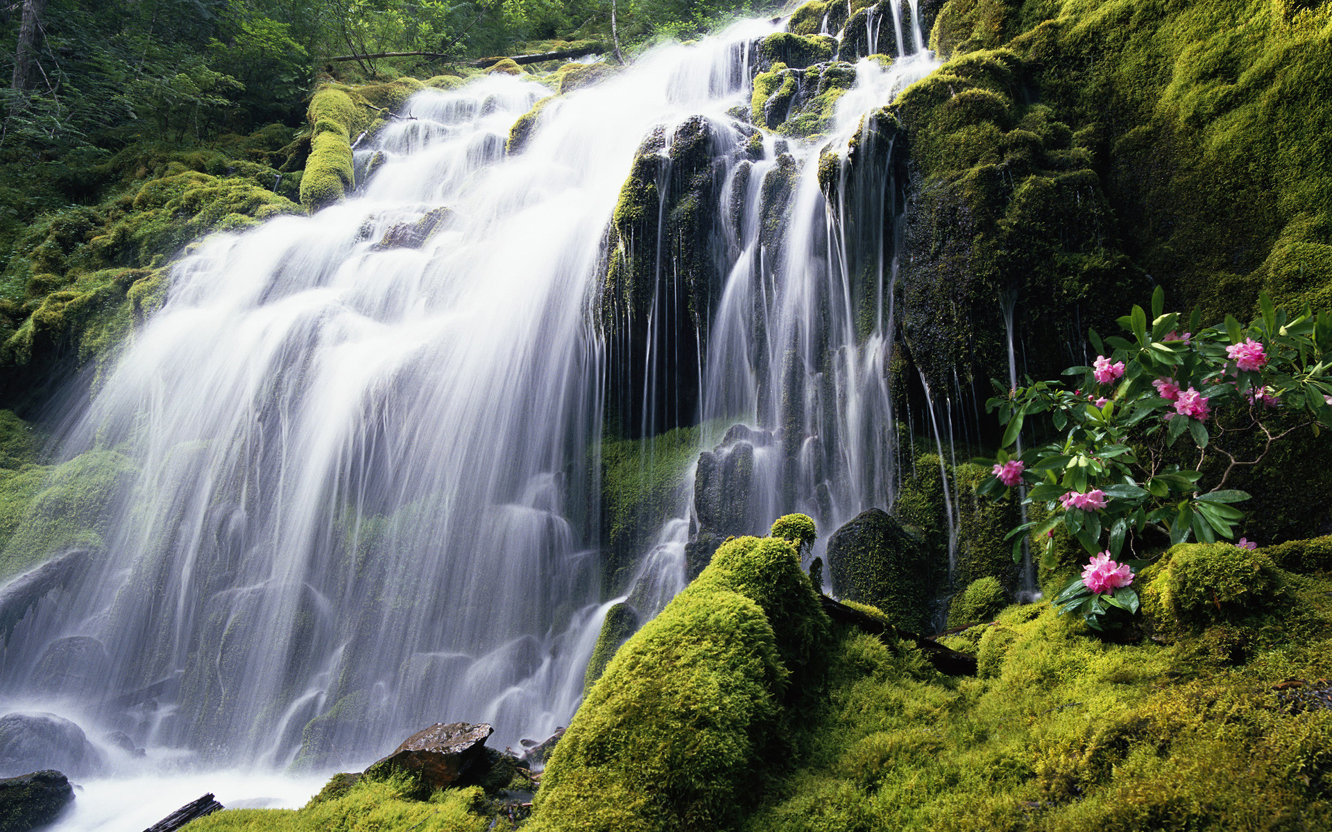 1920x1200 Beautiful Jungle Waterfall Desktop Wallpaper Uploaded by SalahAhmed
