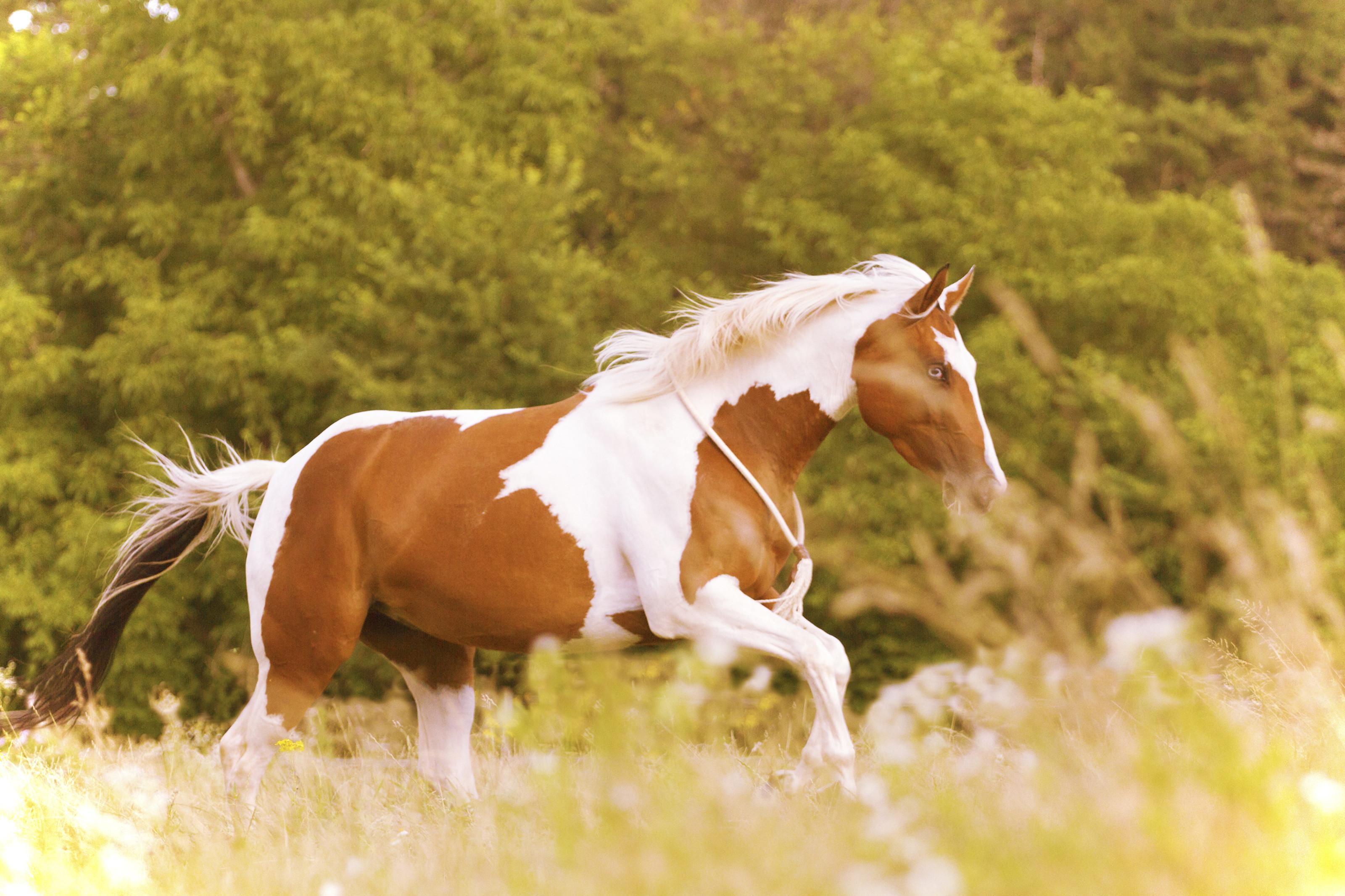 Paint Horse Wallpaper 40 Images