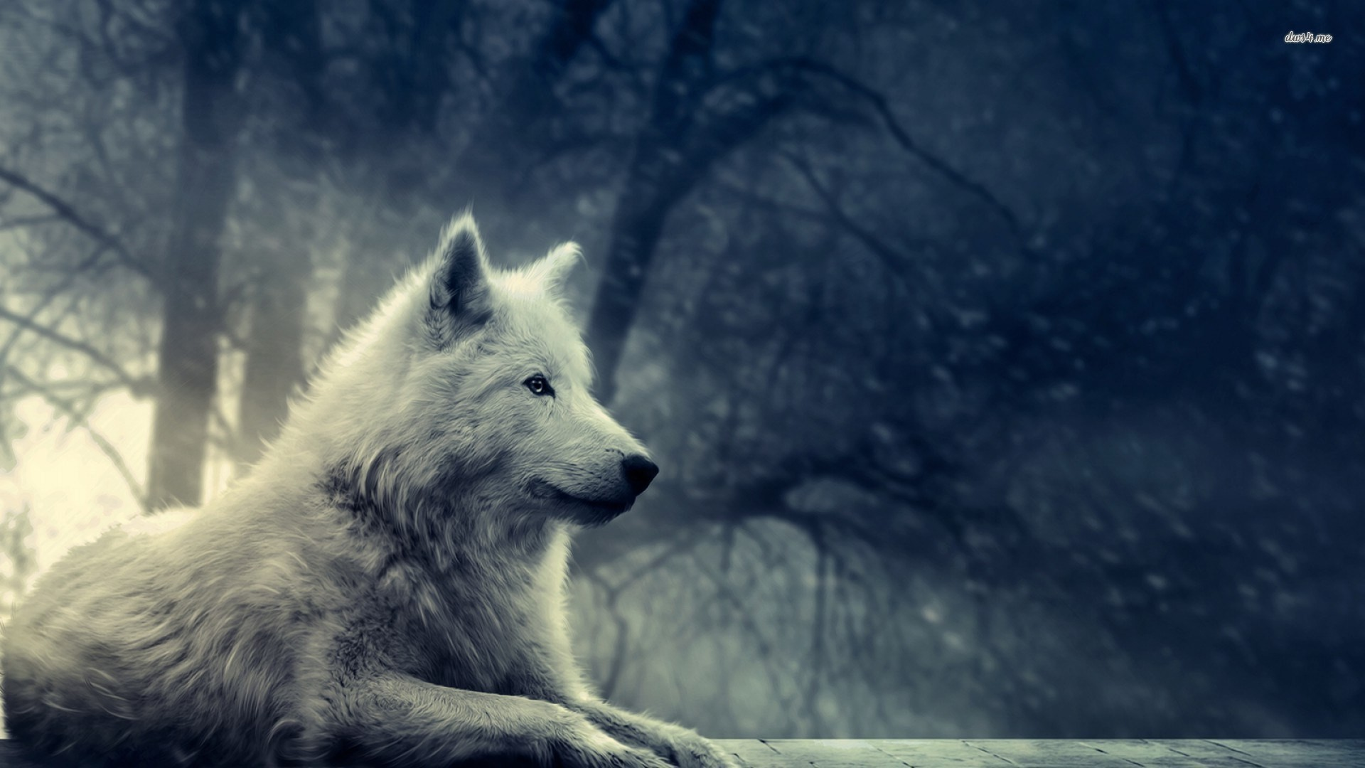 1920x1080 Winfred Nail - wolf art wallpaper for desktops - 1920 x 1080 px