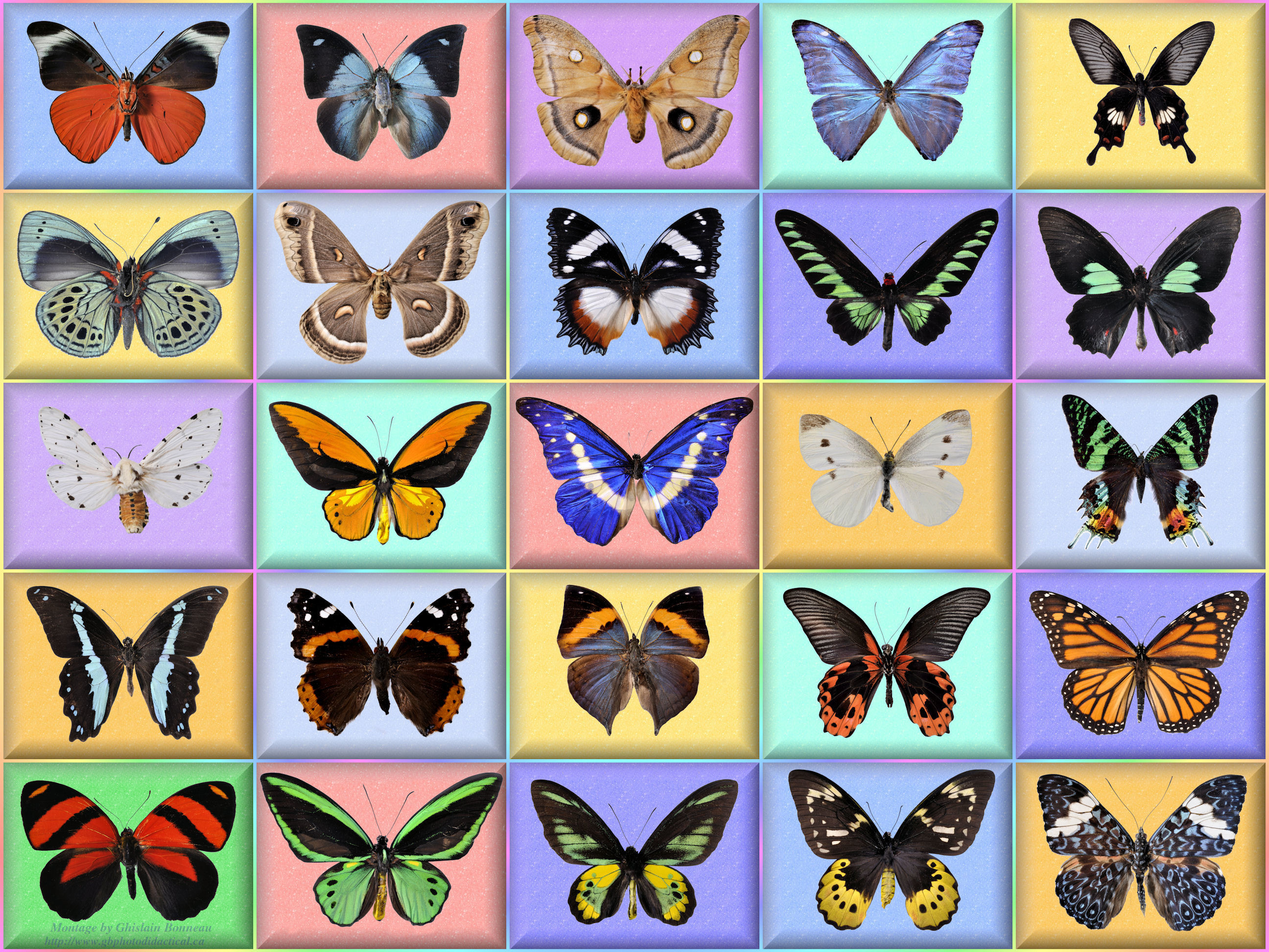 2592x1944 free wallpaper-34-butterfly-Full Screen