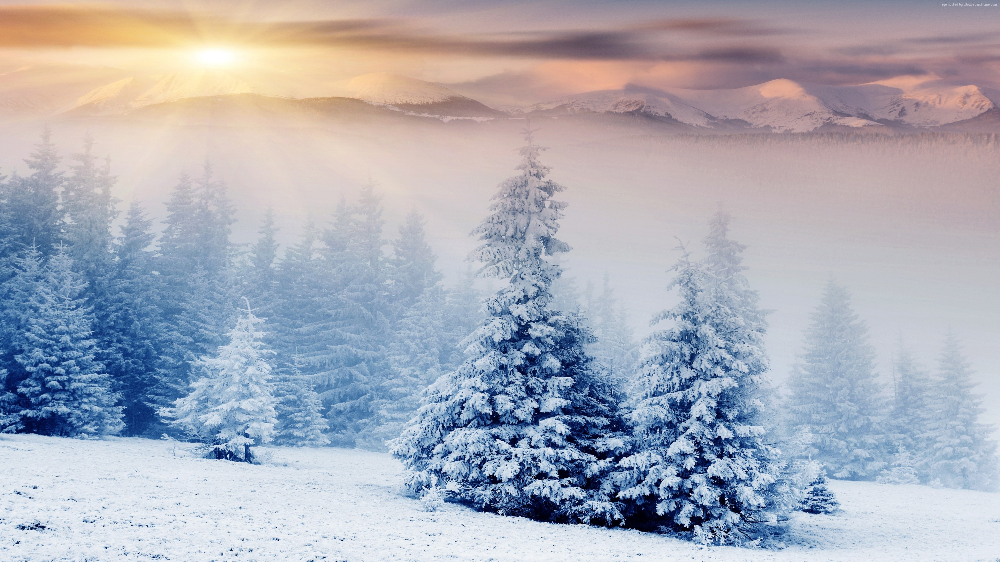 Snow Screensavers and Wallpaper (60+ images)