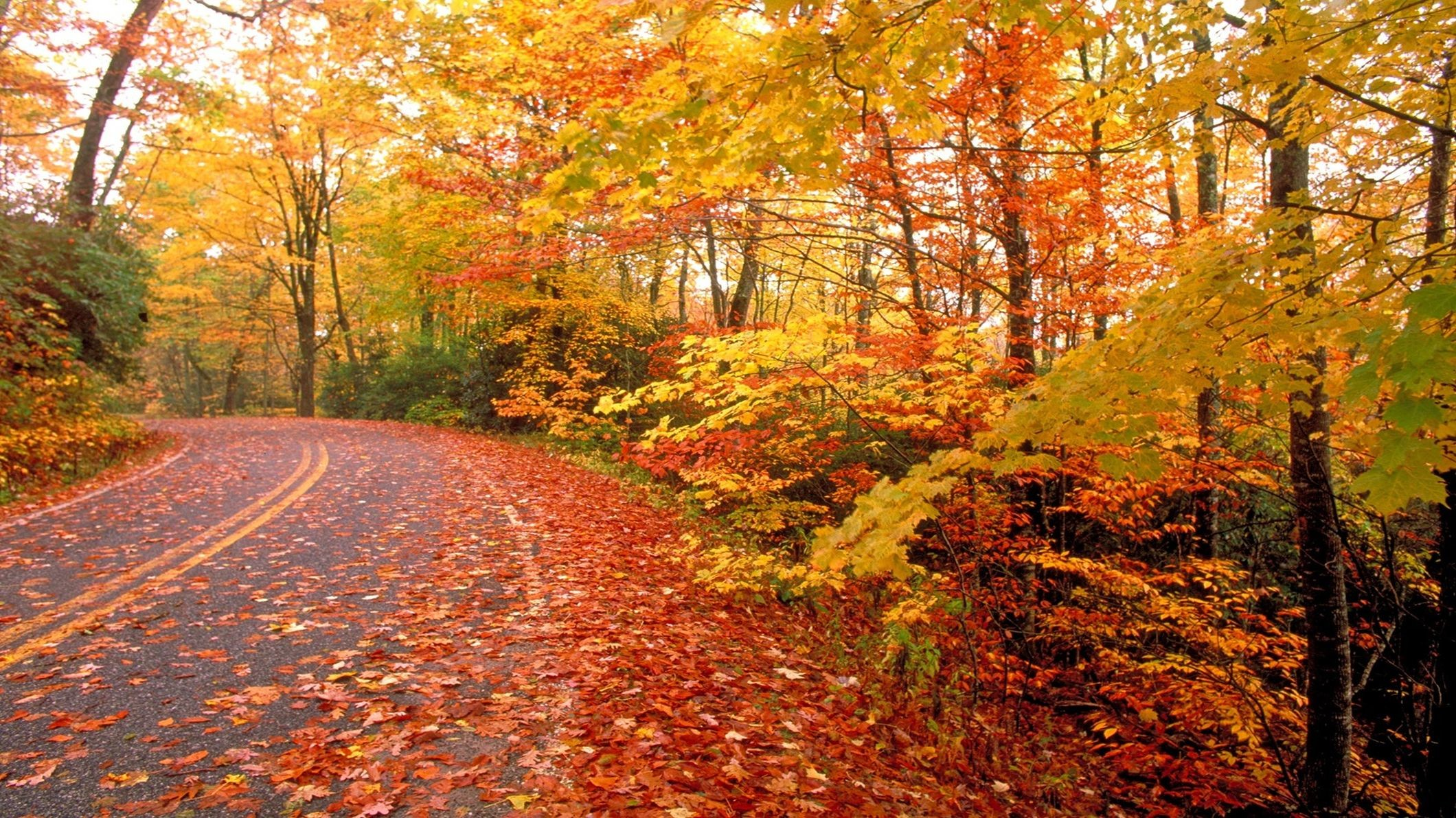 Fall Wallpaper For Desktop Download Free Full Hd: Cool Fall Backgrounds (69+ Images