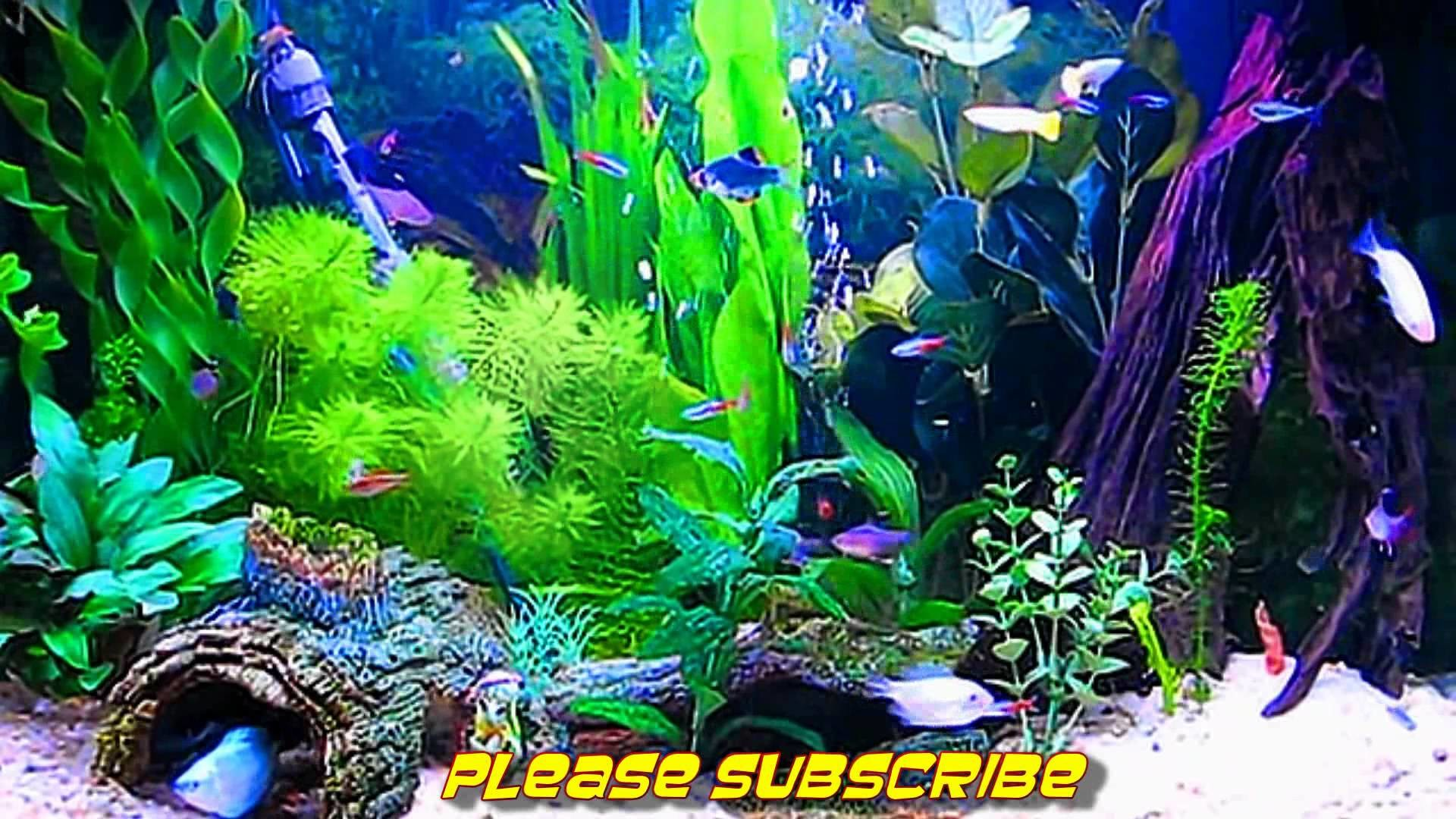 ... live wallpaper wallpapersafari · Download · 1920x1080 Amazing HD Aquarium ScreenSaver (Free) Windows and Android - YouTube