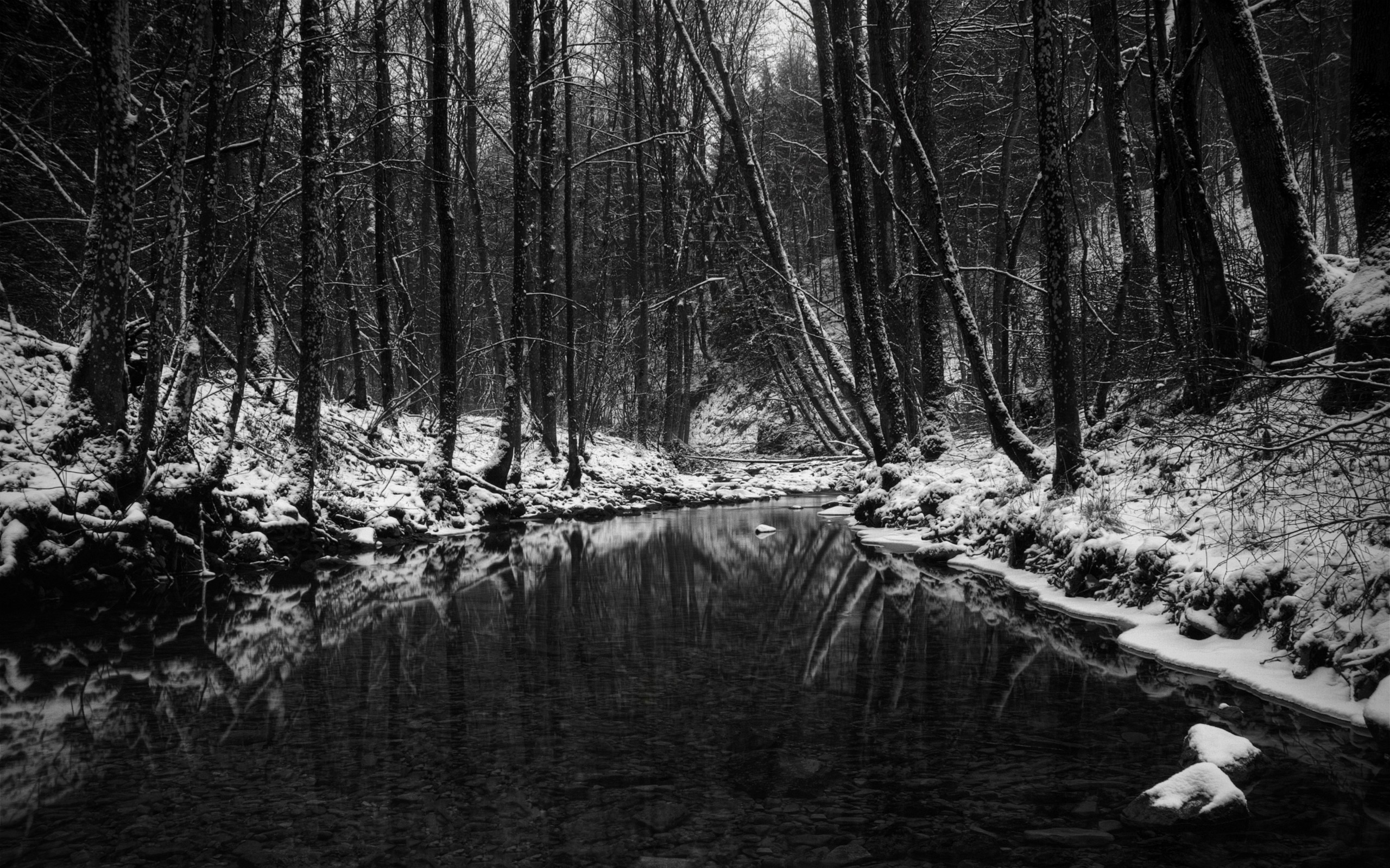 2560x1600  Wallpaper wood, stream, snow, trees, black-and-white,