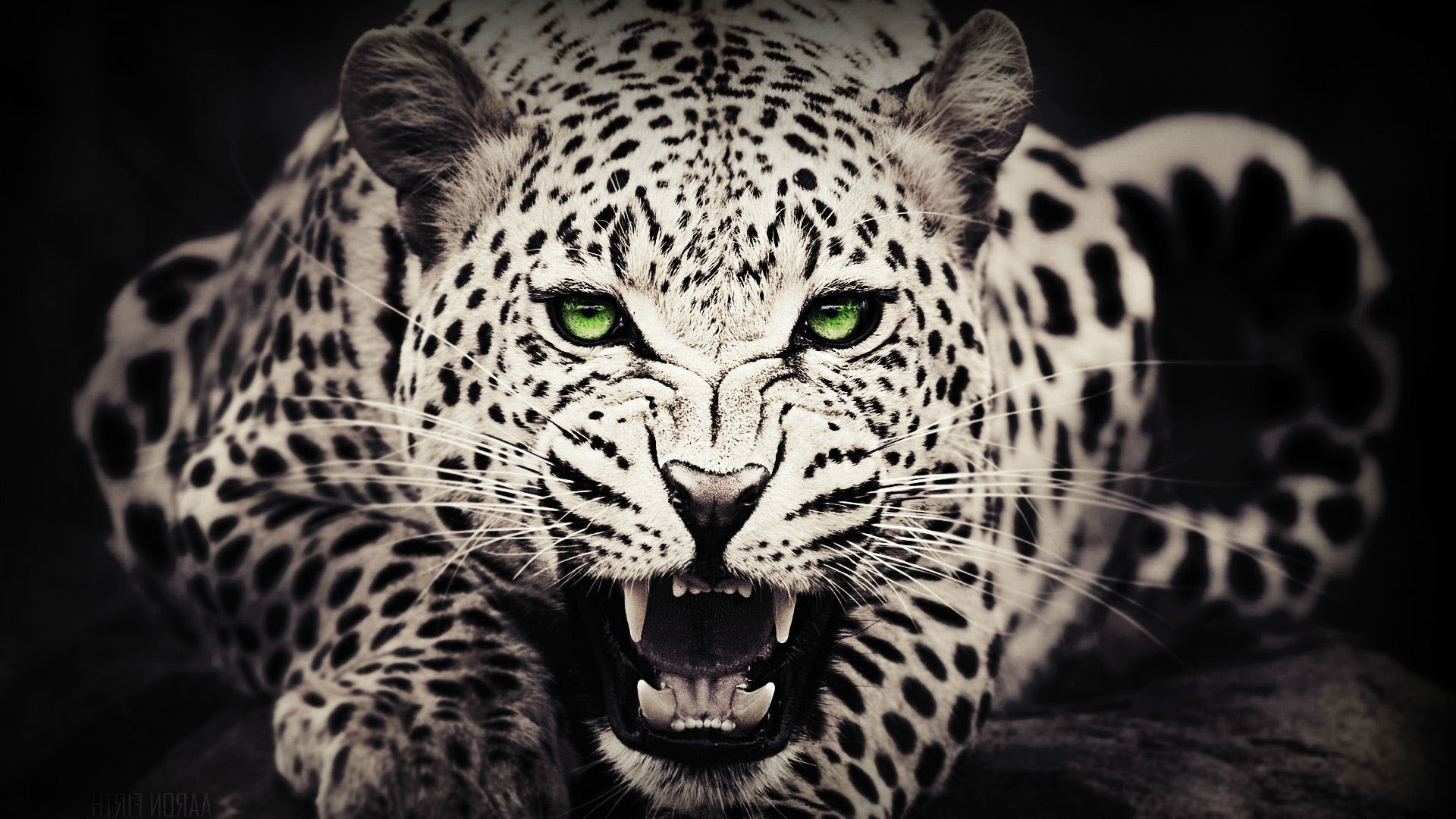 Wallpapers Of Cheetah 72 Images