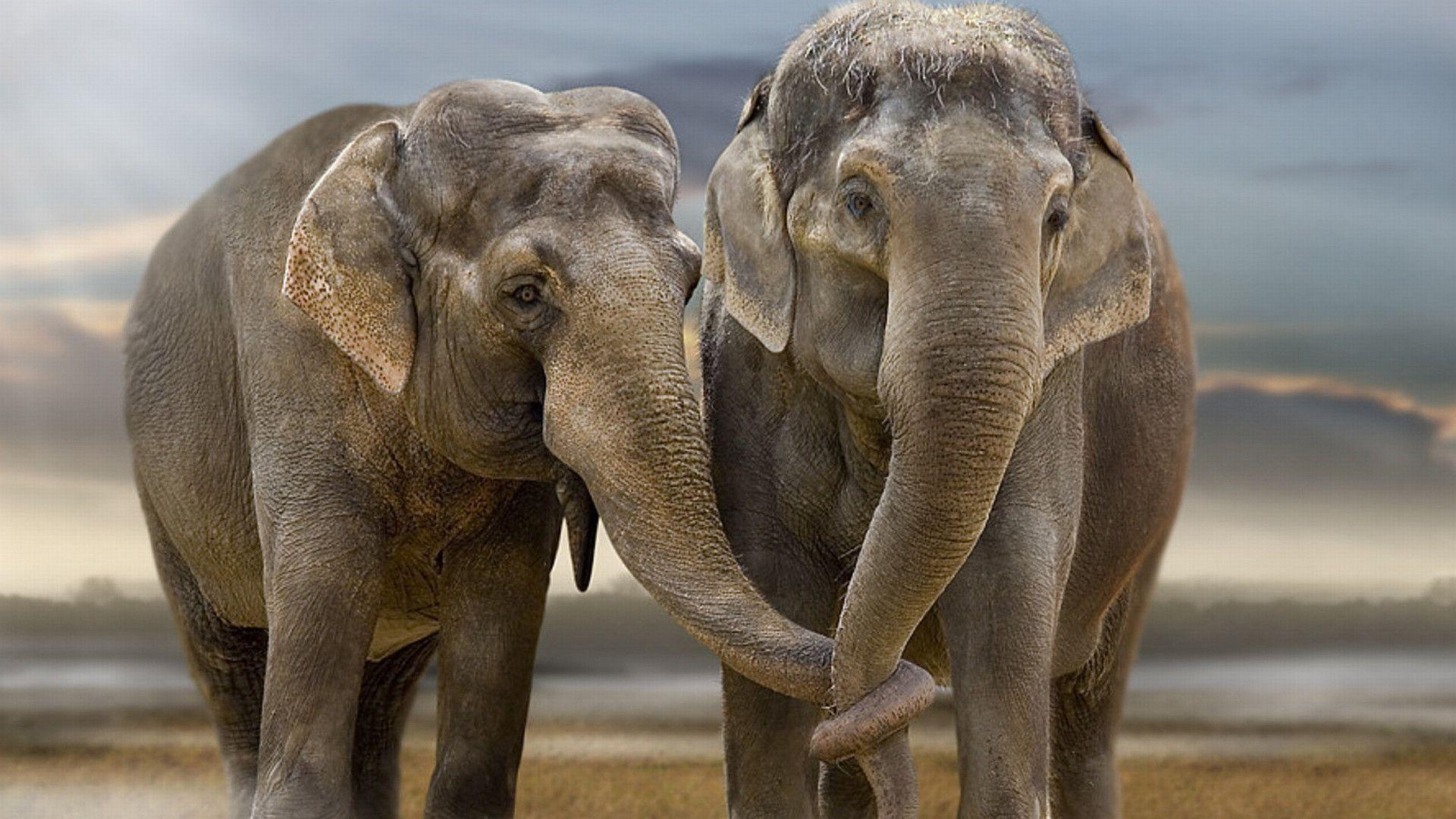 1920x1200 African Elephant Hd Wallpaper