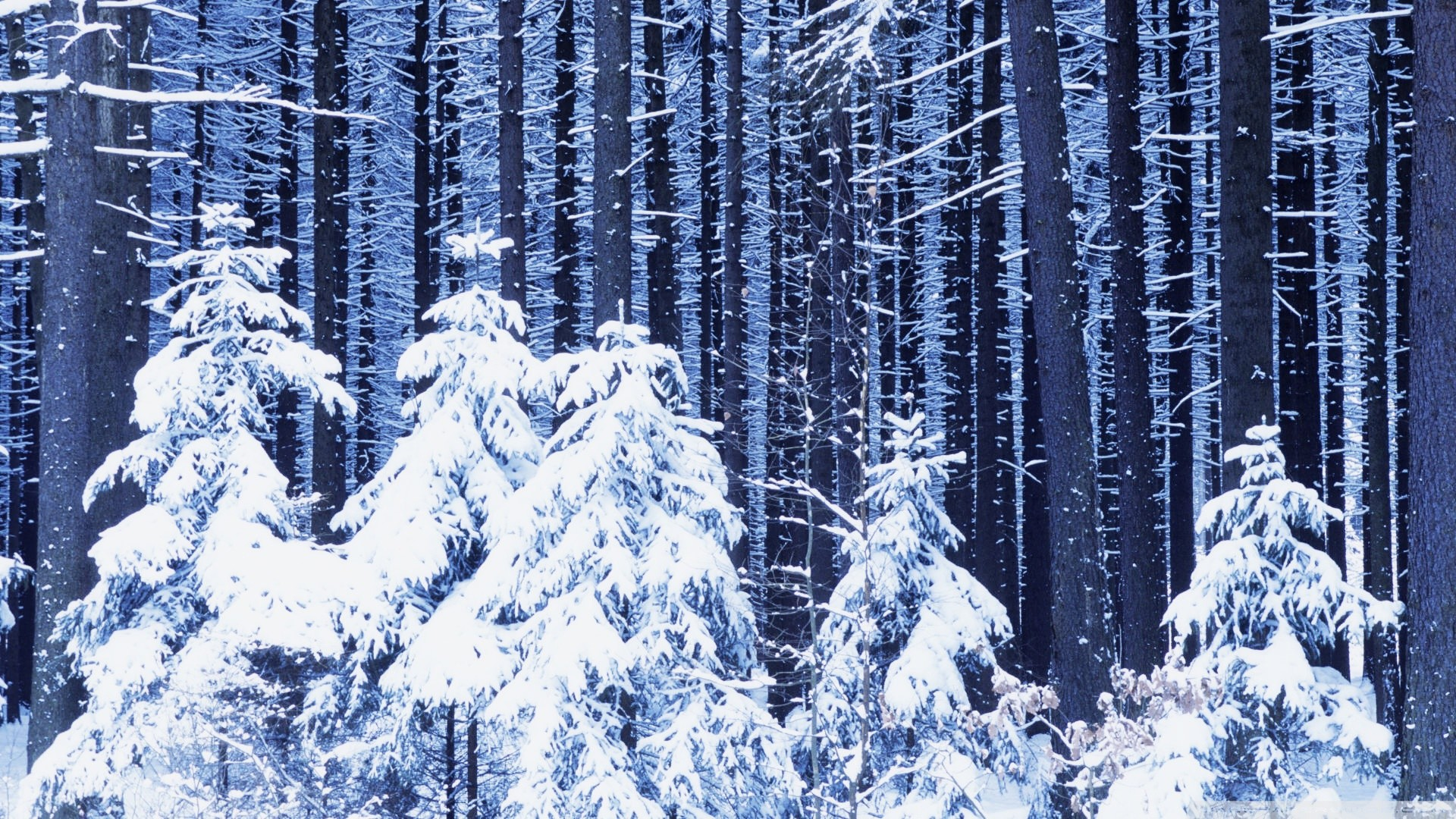 Winter Forest Wallpaper 62 Images