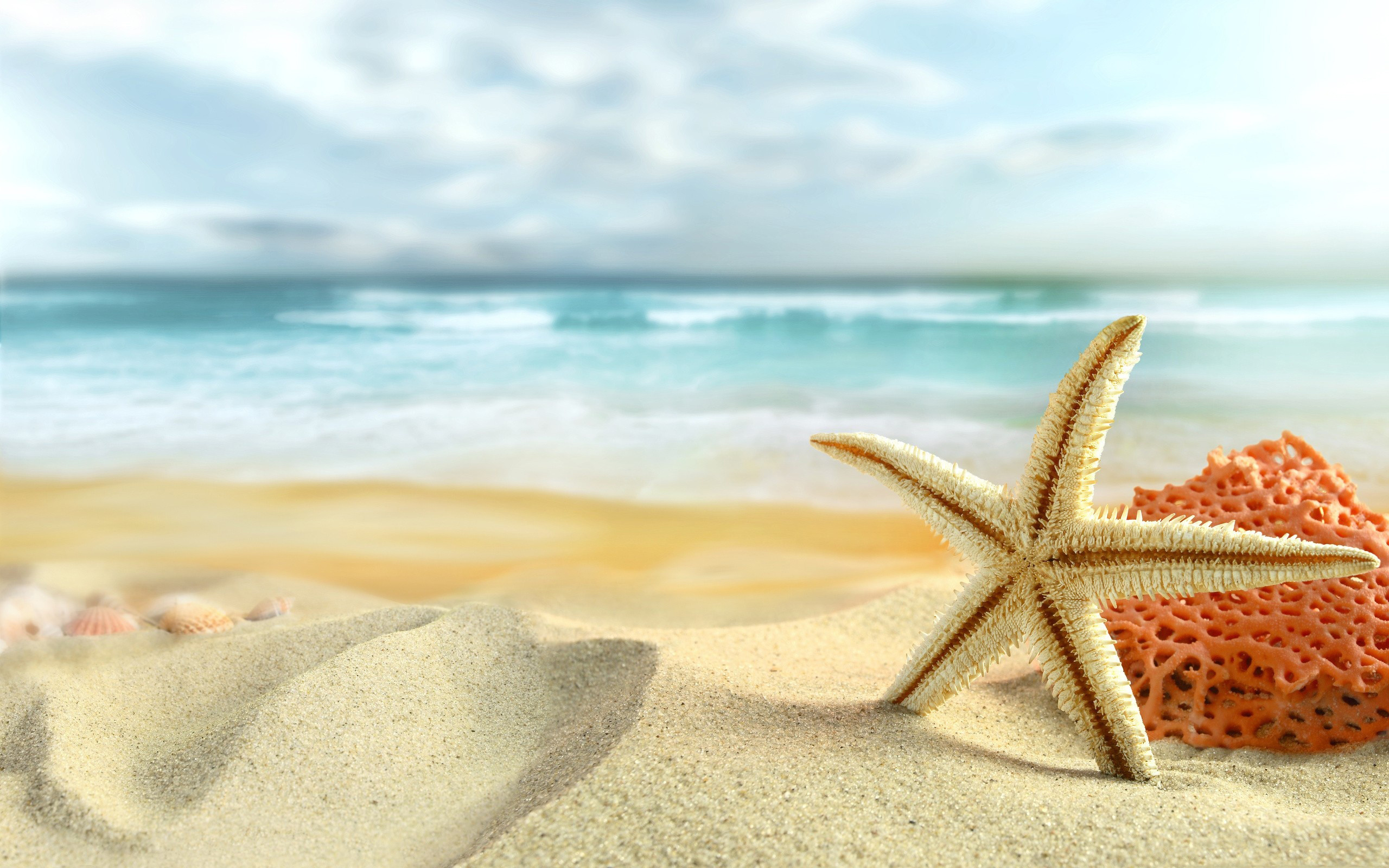 2560x1600 Beach Starfish Desktop Wallpaper 2219 #1029