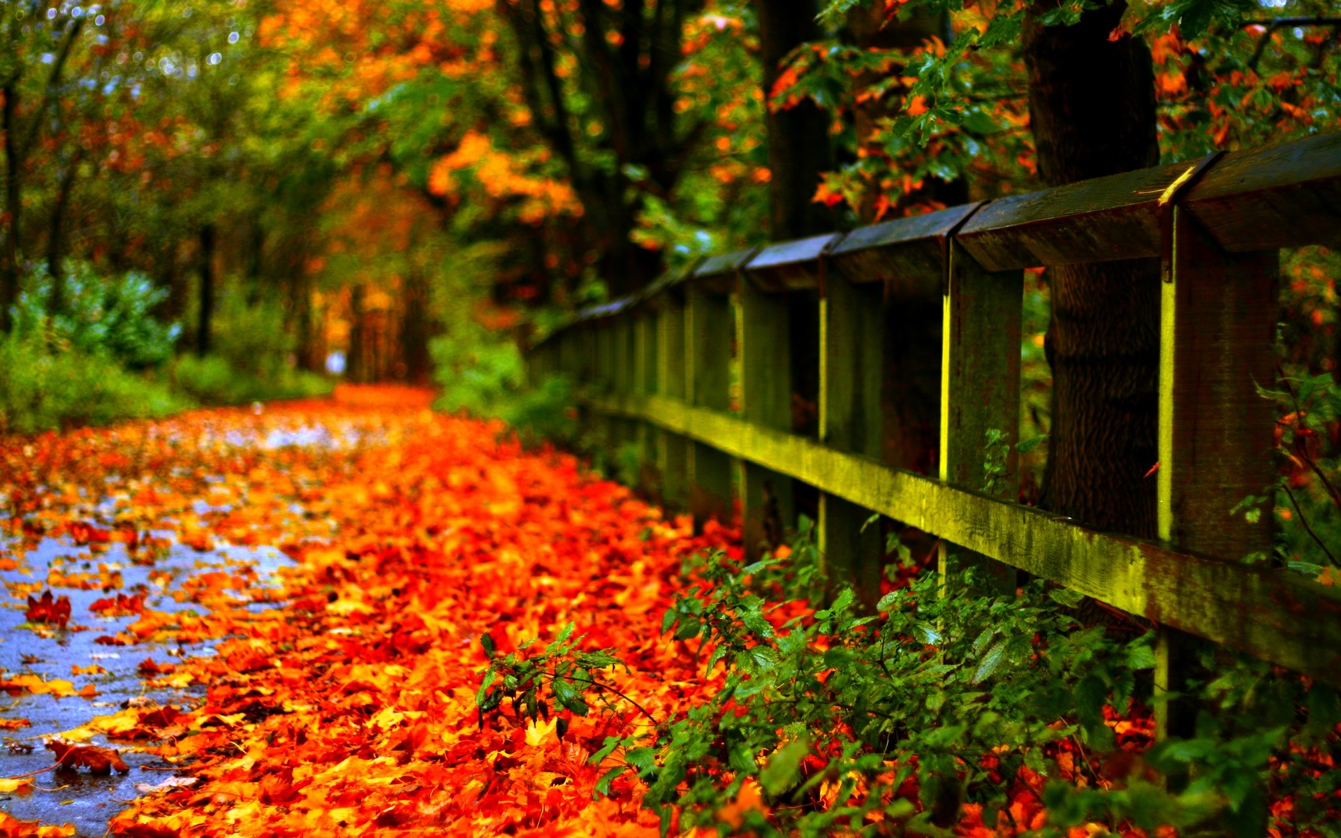1920x1200 Autumn Leaves Wallpaper 33099